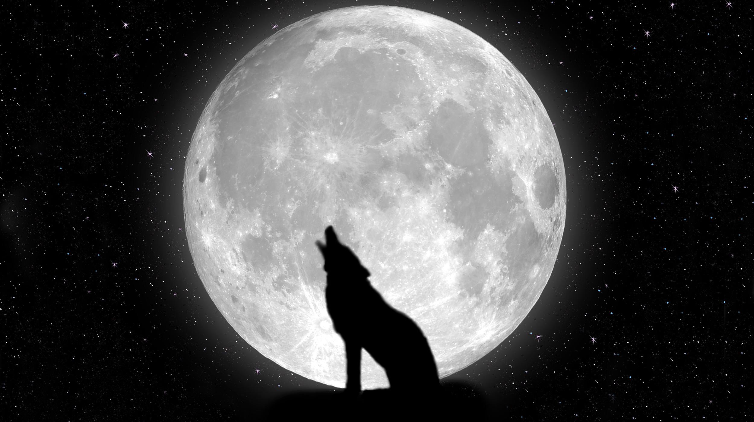 moon Night stars Wolf HD Wallpaper