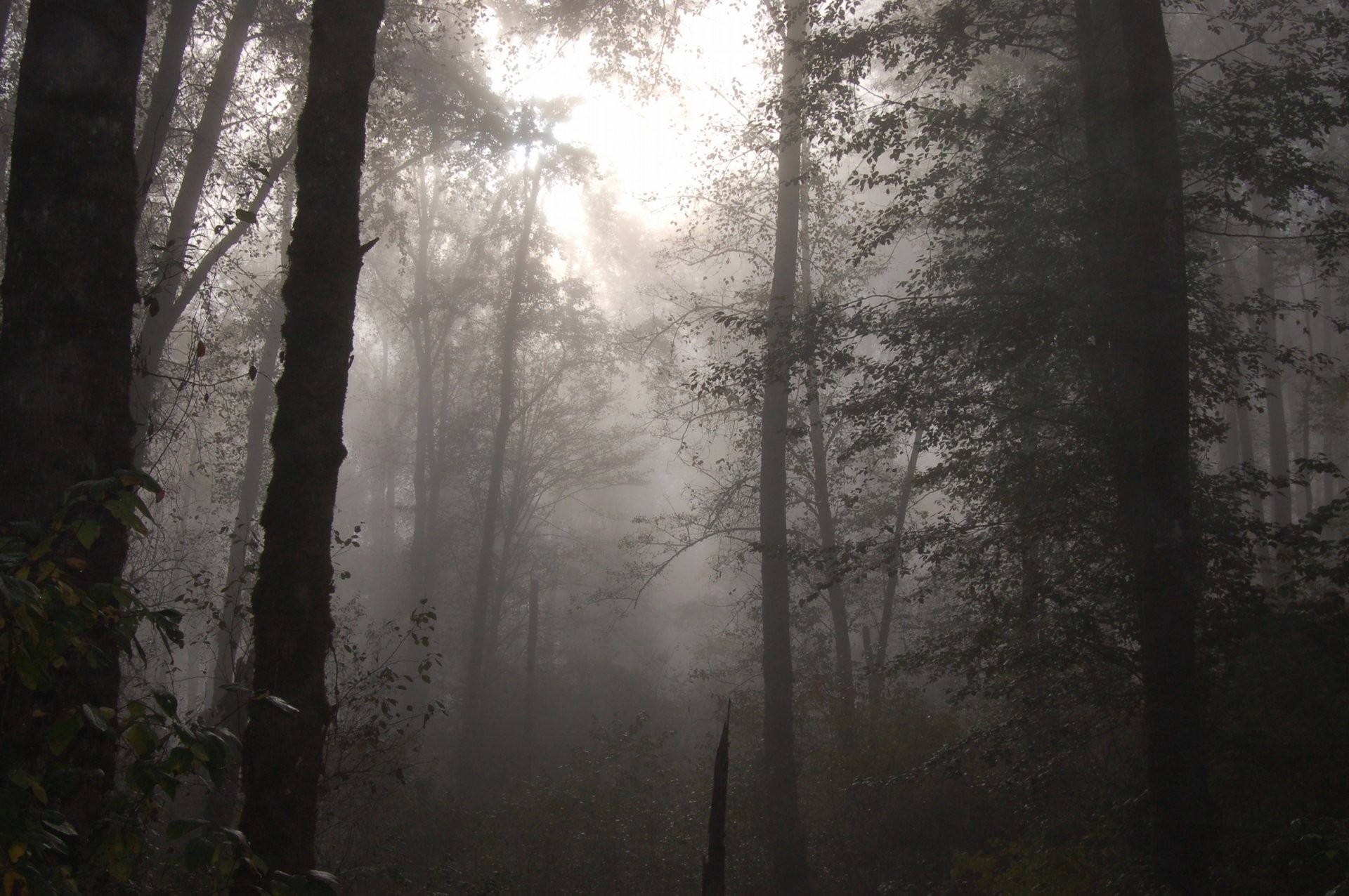 Foggy forest wallpaper – Nature wallpapers – Free wallpapers, Desktop .