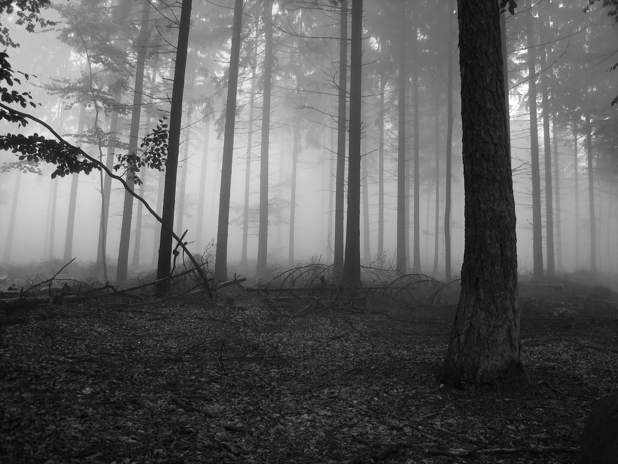 px wallpaper desktop fog by Todd MacDonald for –  pocketfullofgrace.com