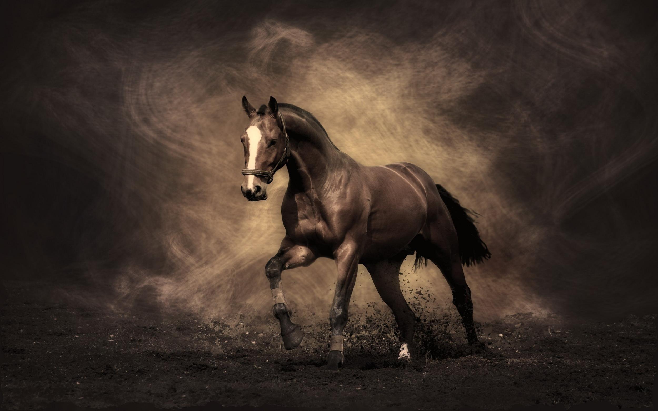 HD Wallpapers | HD Wallpaper Sephia Horse Colour | HD Gallery