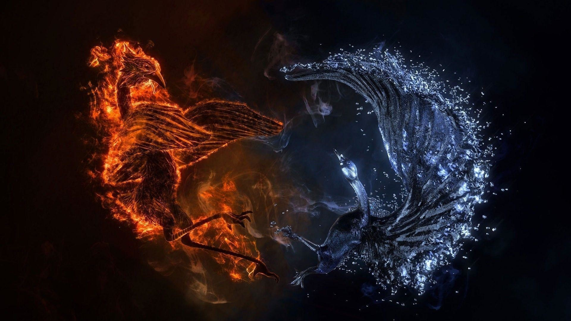 Pictures Of Dragon Ying Yang Wallpapers