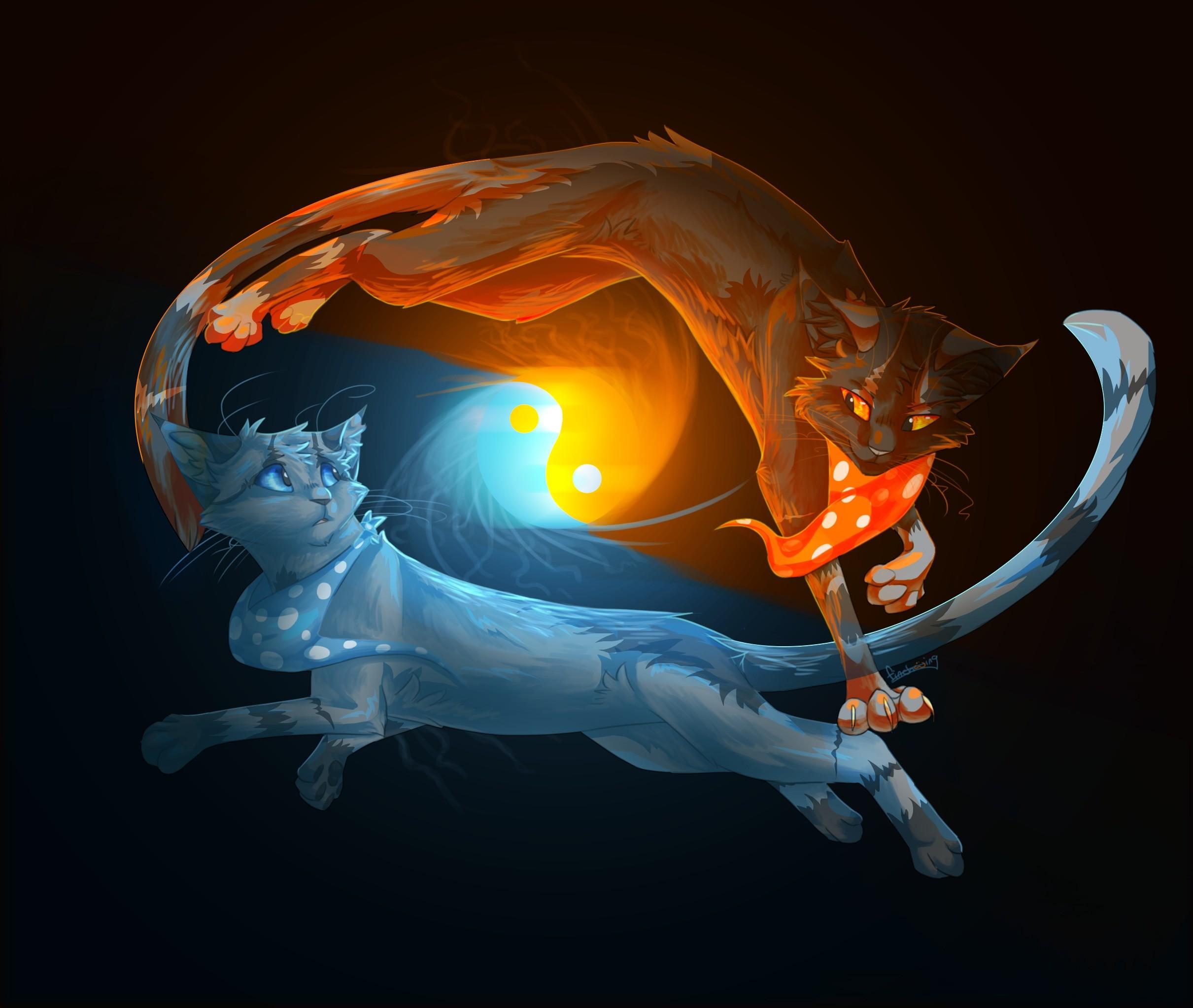 2 Fire Cats | Animals, cats, yin-yang, fire, water,