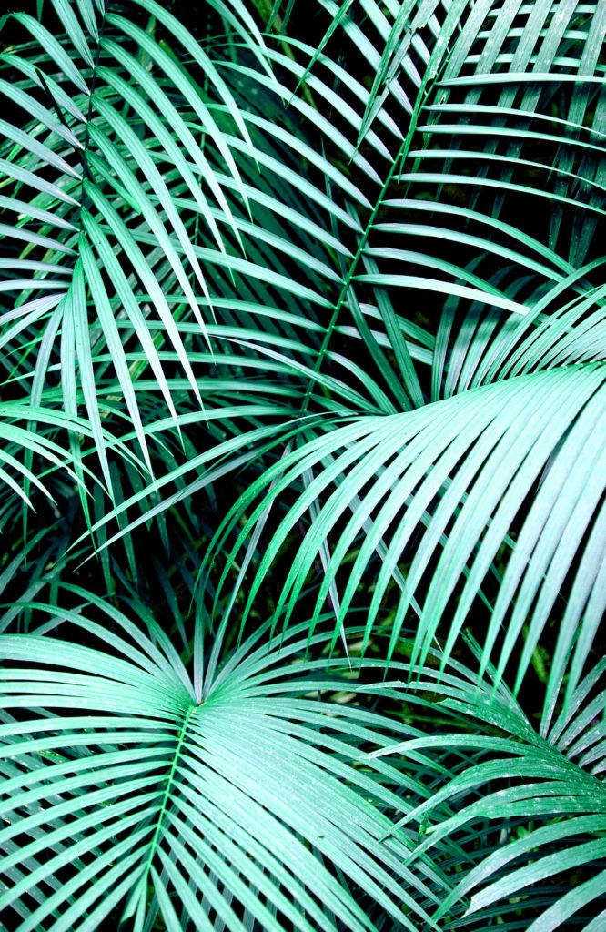 Palms Art Print by Karen Hofstetter