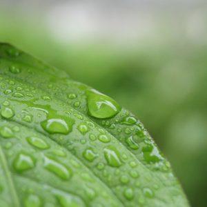 HD Rain