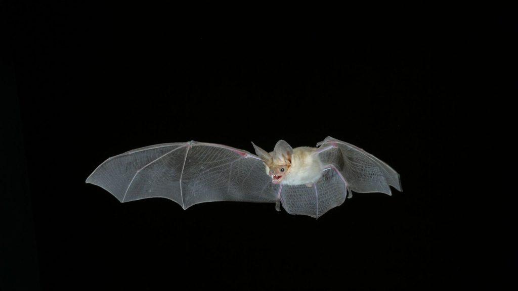 Bat Computer Full HD Wallpaper.