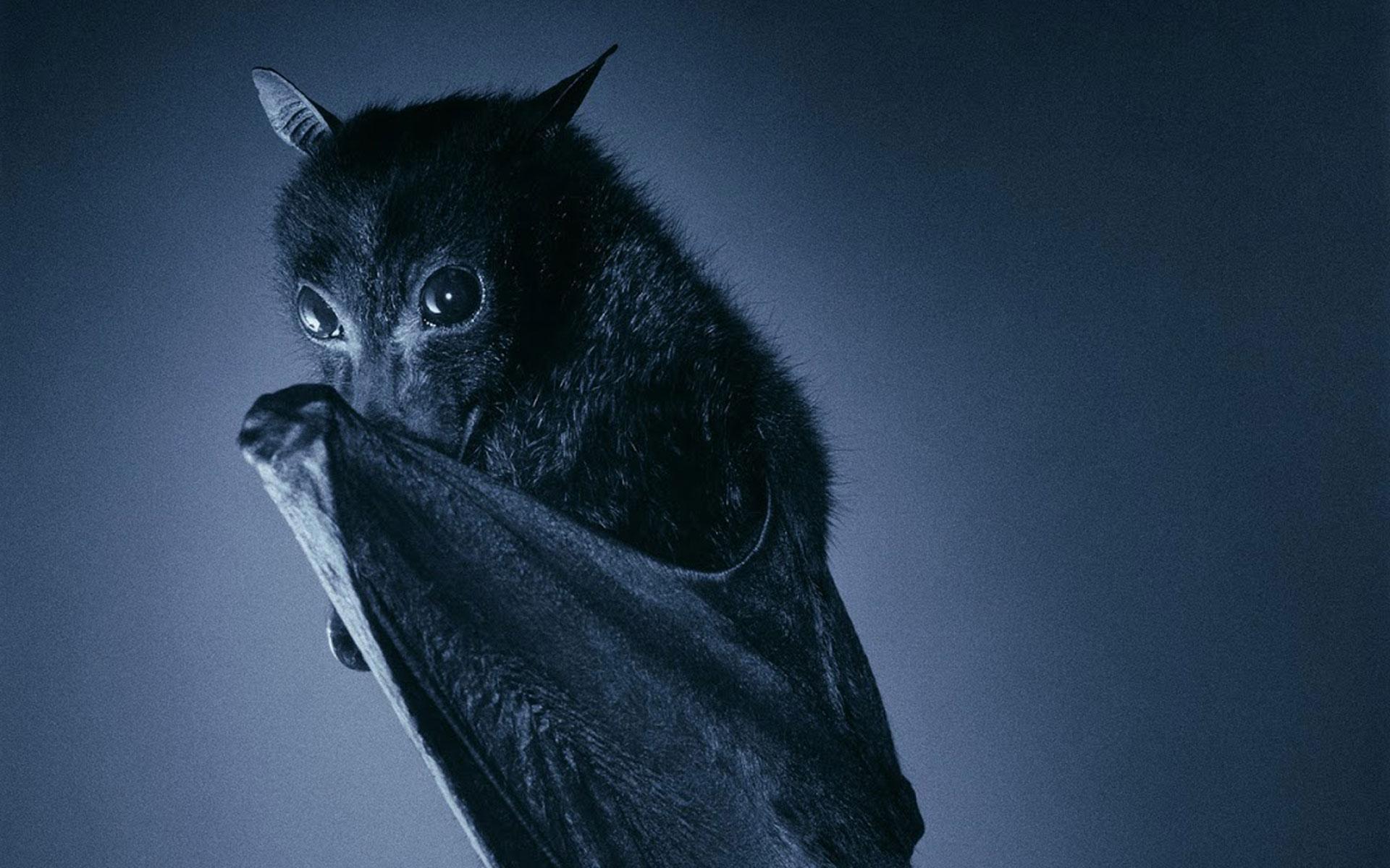 wallpaper.wiki-Bat-Computer-Background-for-Desktop-PIC-
