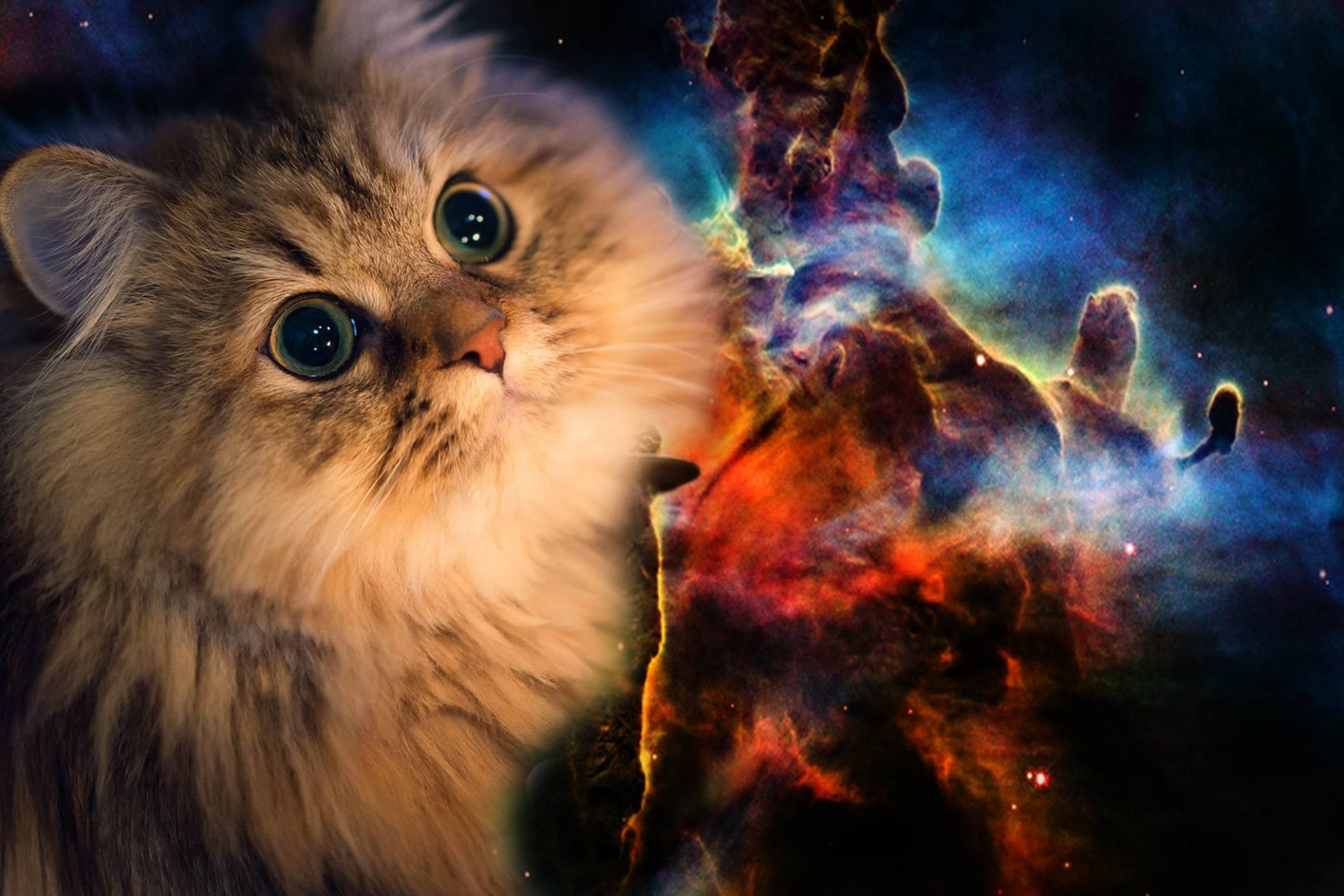Collection of Galaxy Cat Wallpaper on HDWallpapers Galaxy cat wallpaper  Wallpapers)
