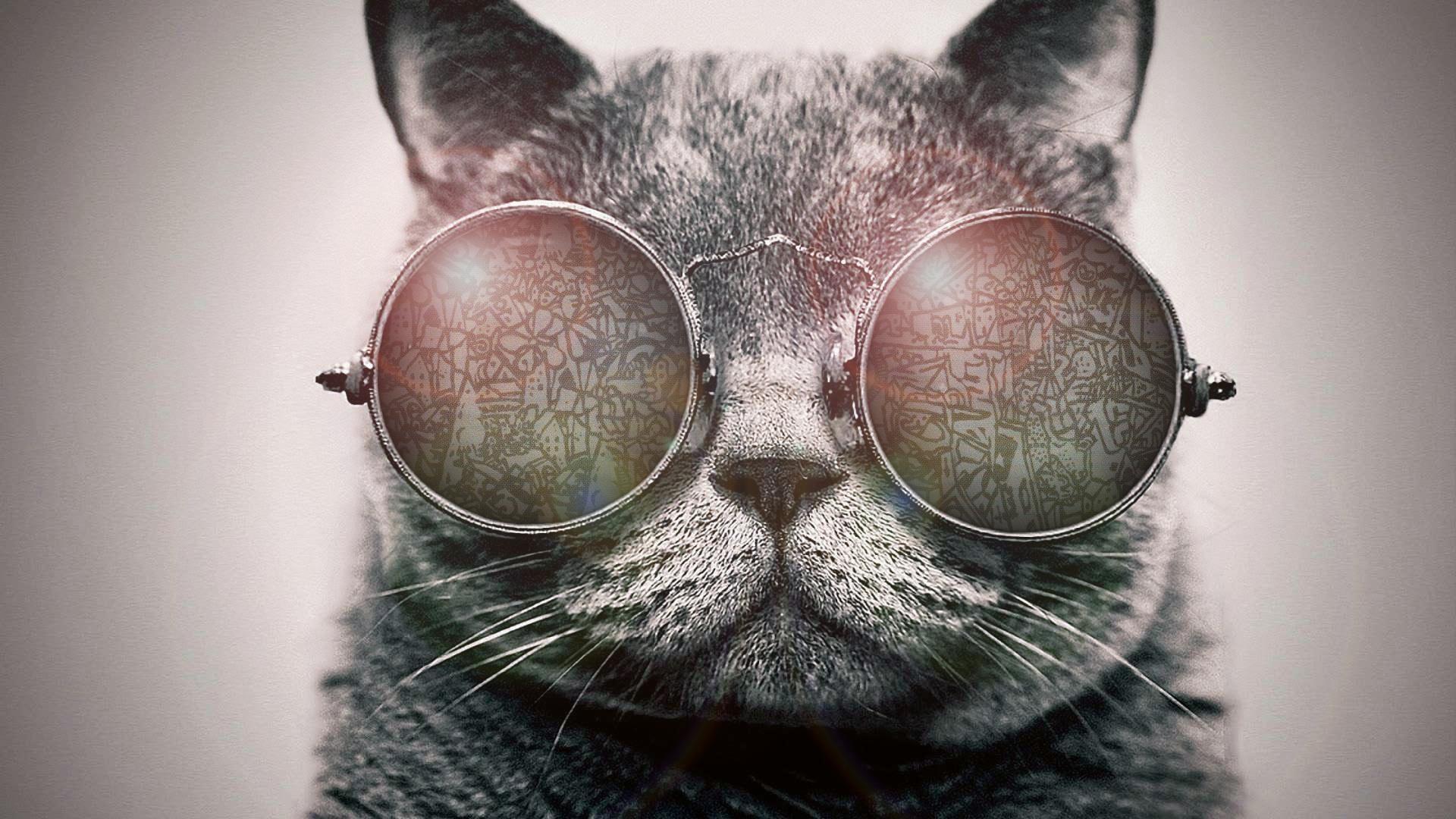 животноводстве обои на телефон с котиком в очках чем начать
