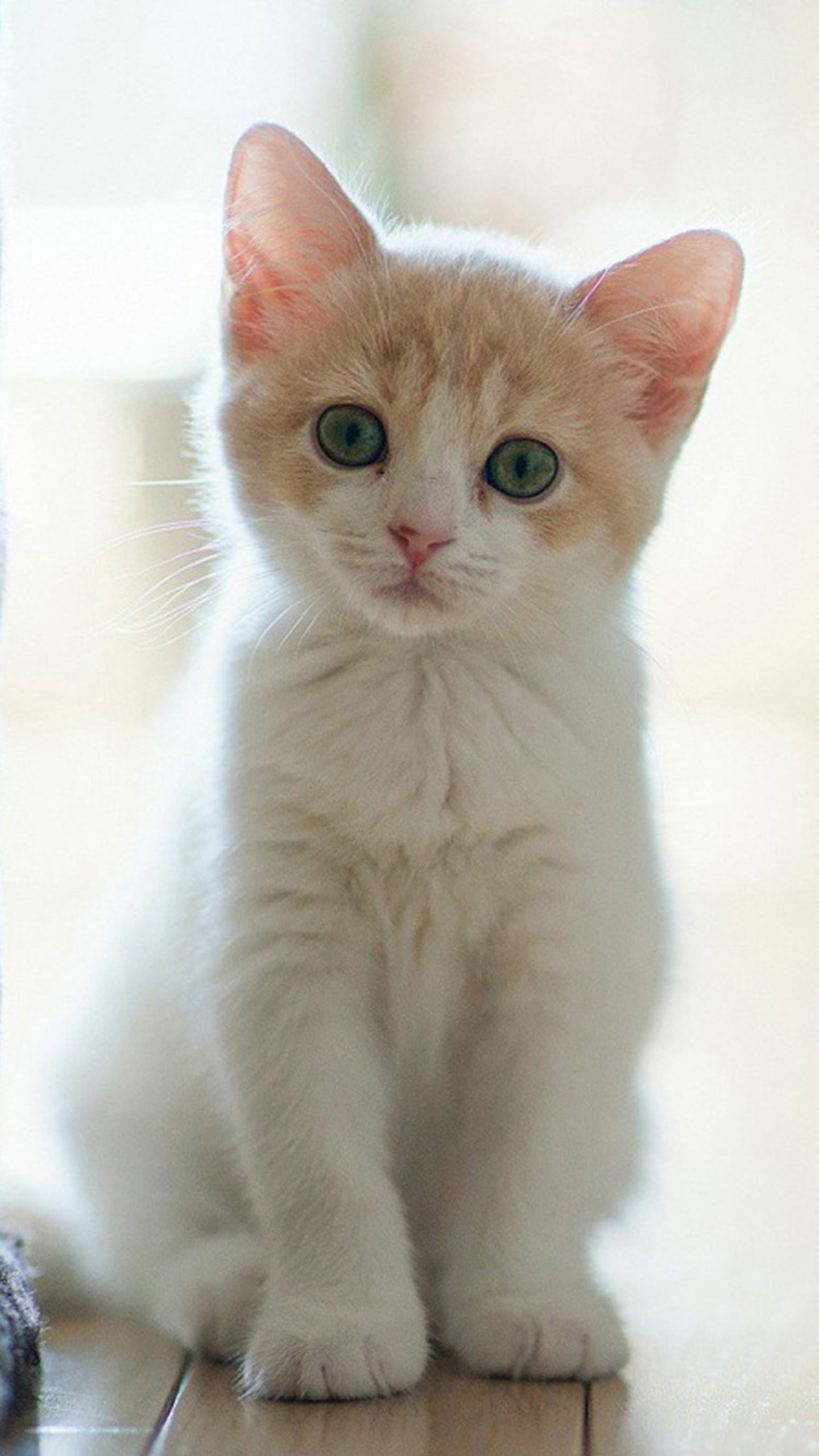 Cute cat 04 Galaxy Note 4 Wallpapers