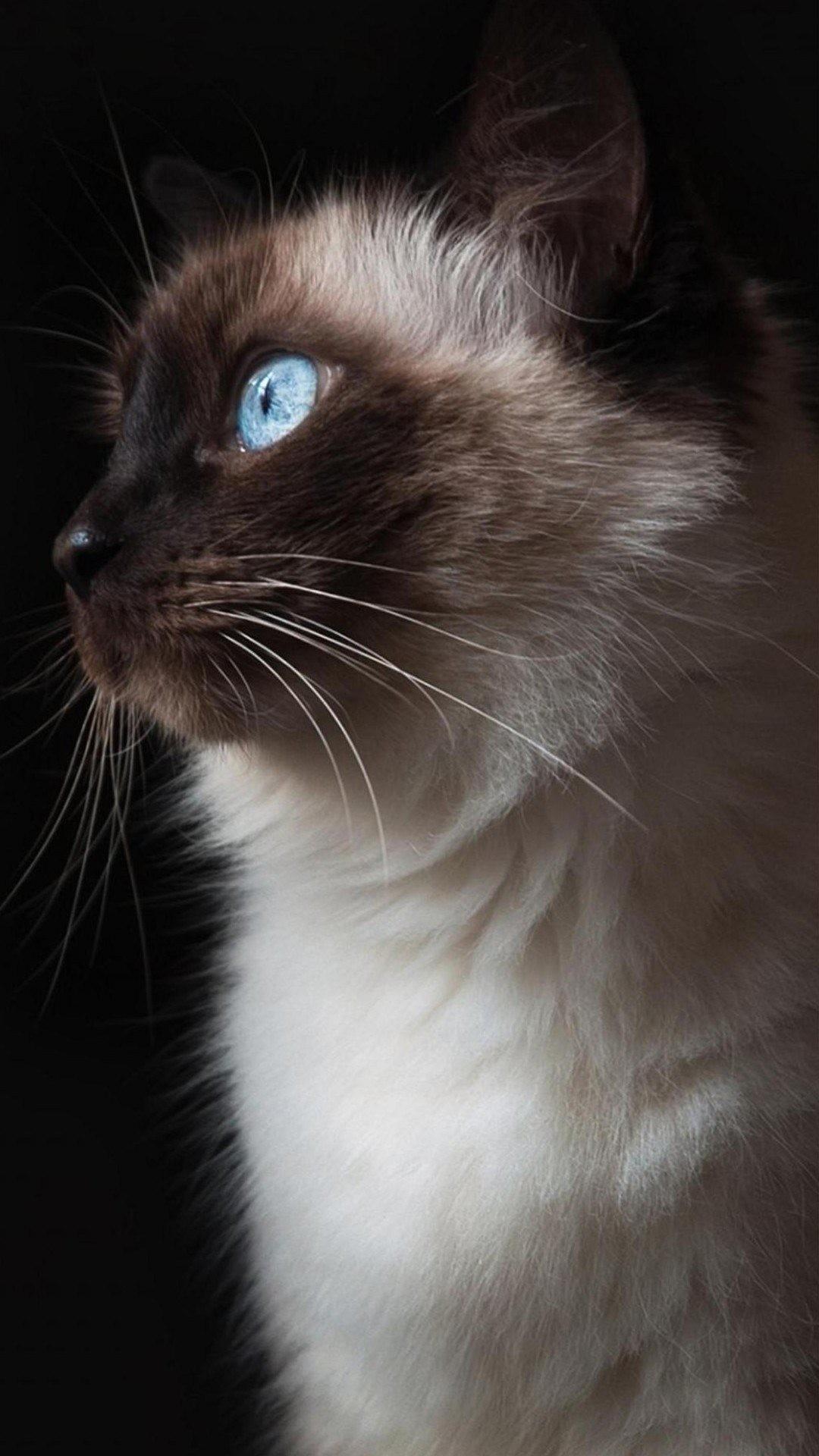 Z wallpaper full hd 1080 x 1920 smartphone beautiful cat