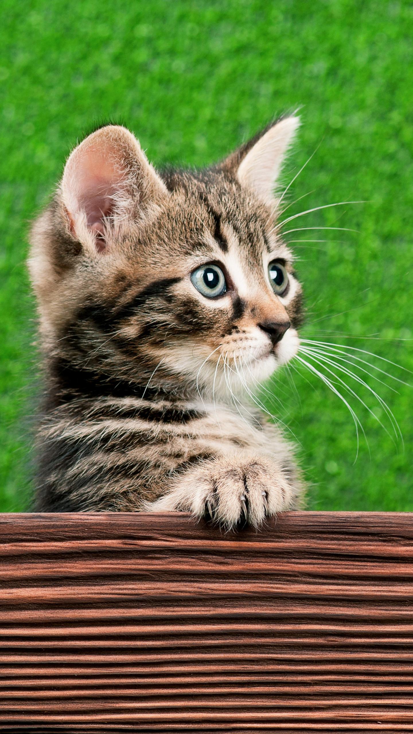 Cat's eyes Galaxy S6 Wallpaper