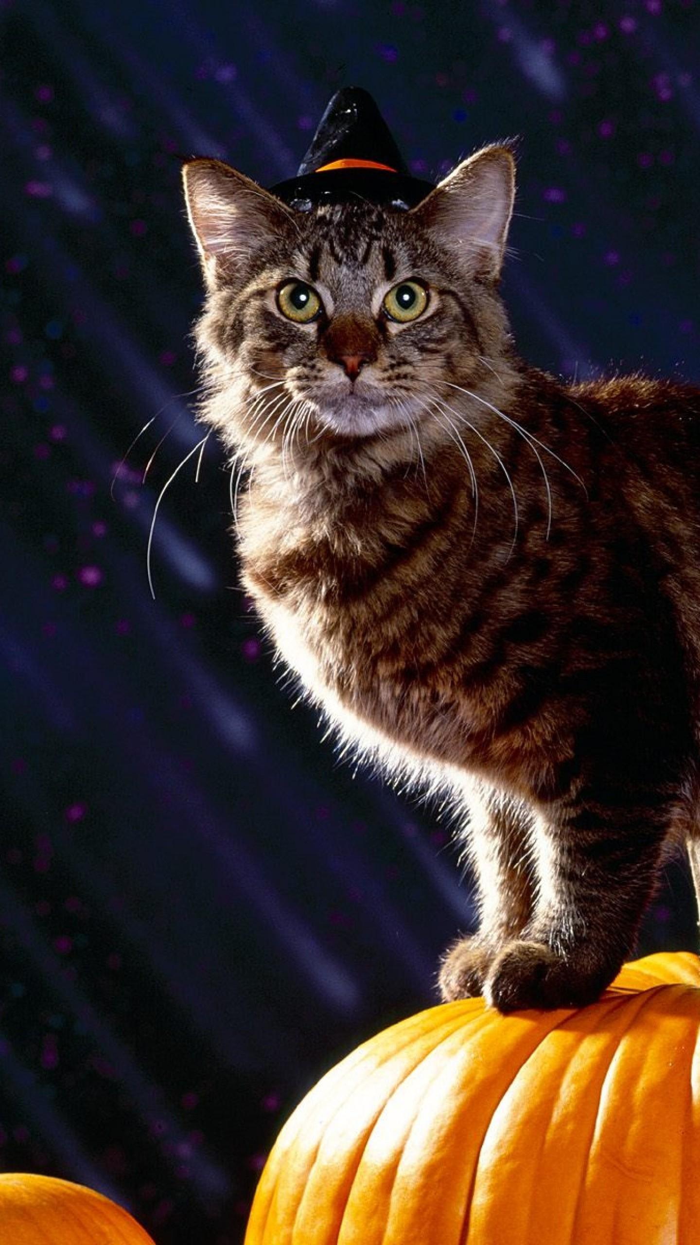 Wallpaper cat, halloween, fluffy, pumpkin