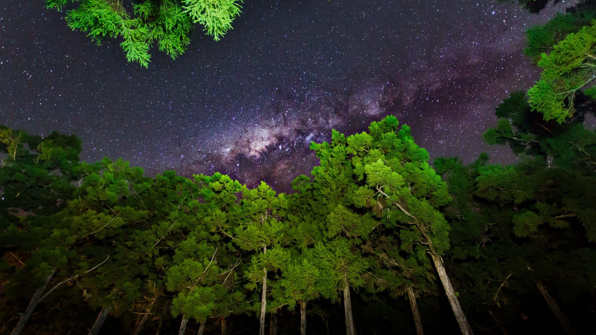 Grass Green Trees Milky Way