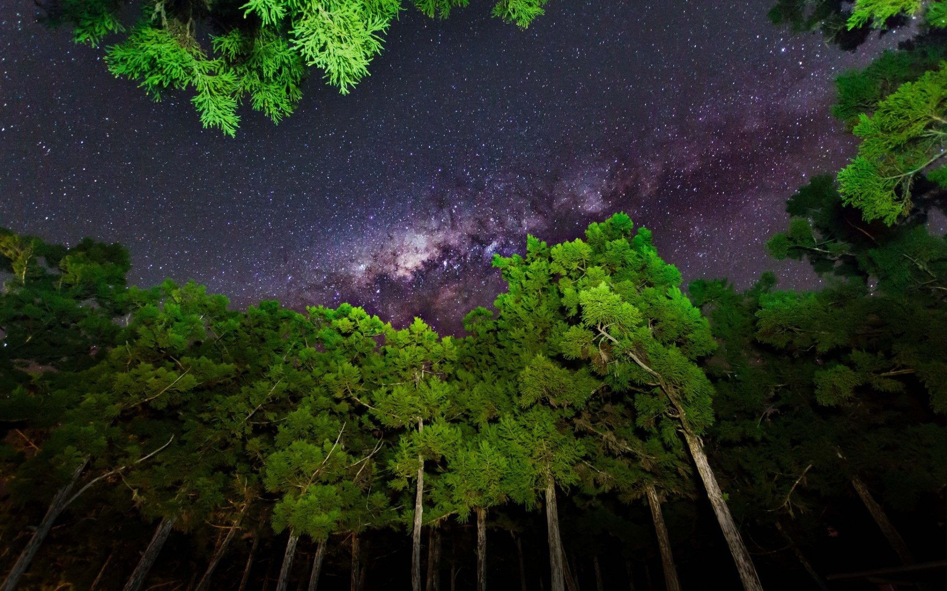 sky, Forest, Stars, Milky Way Wallpapers HD / Desktop and Mobile Backgrounds