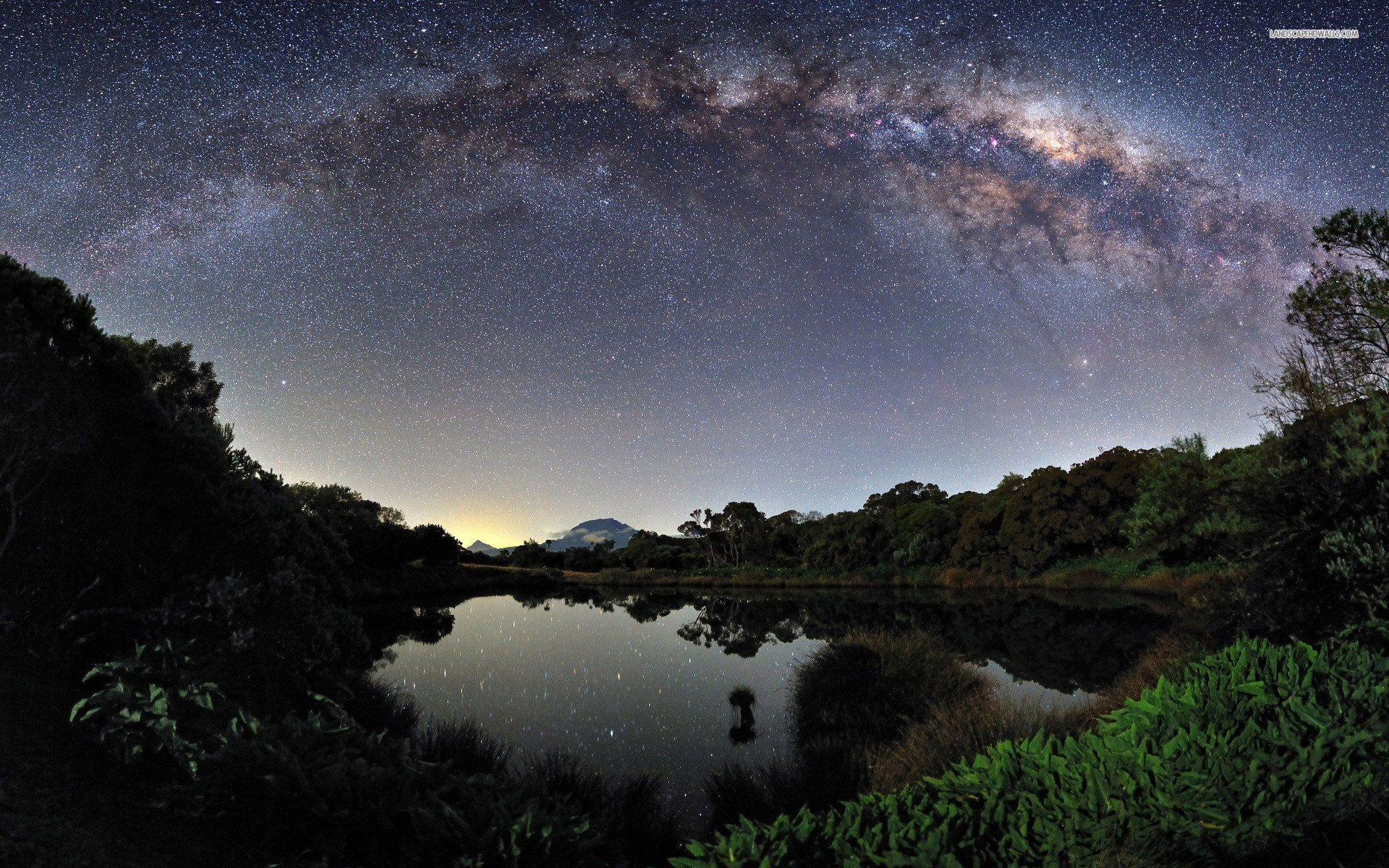 Milky Way Lake Forest Plants wallpapers and stock photos