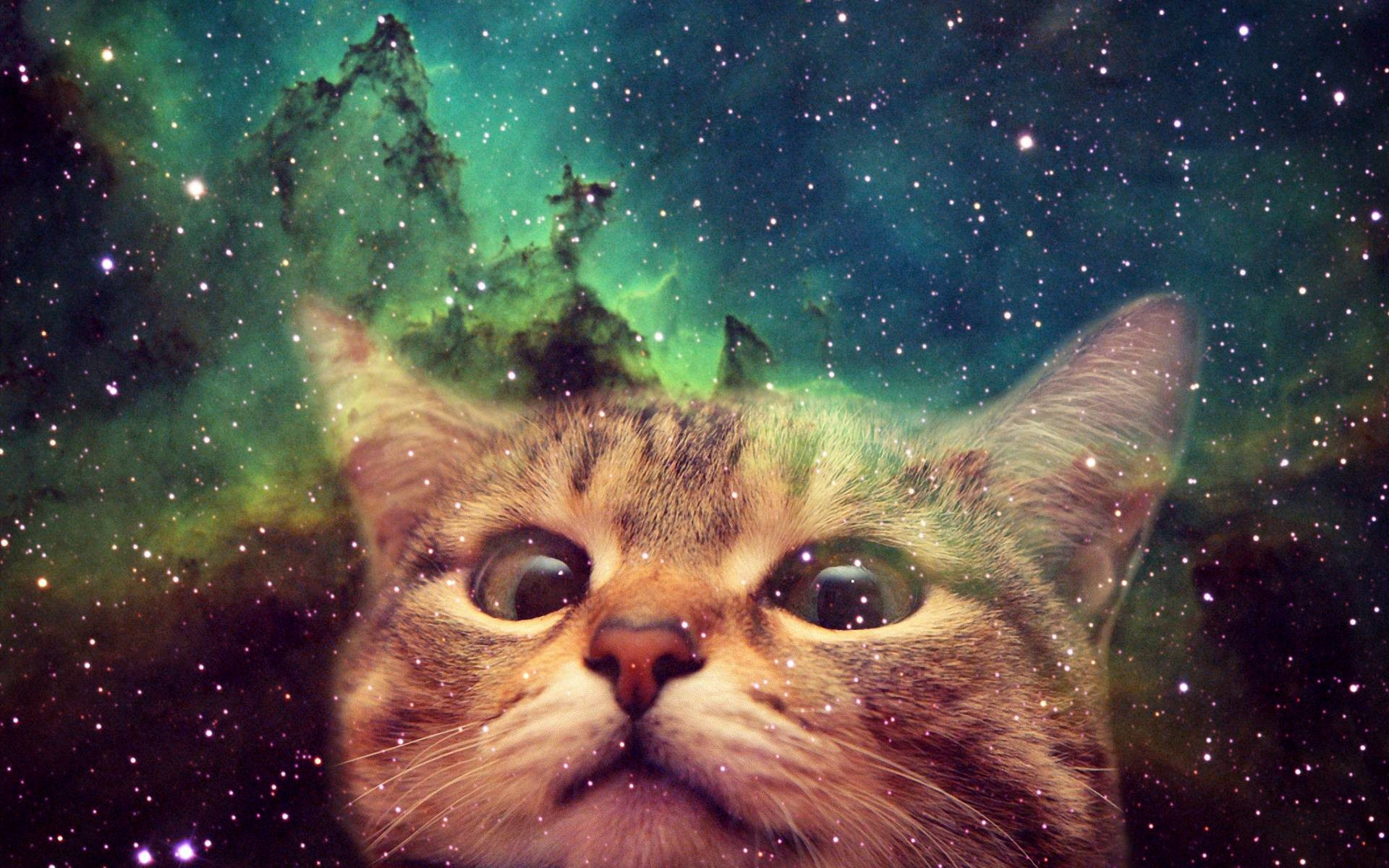 Space Cat Background