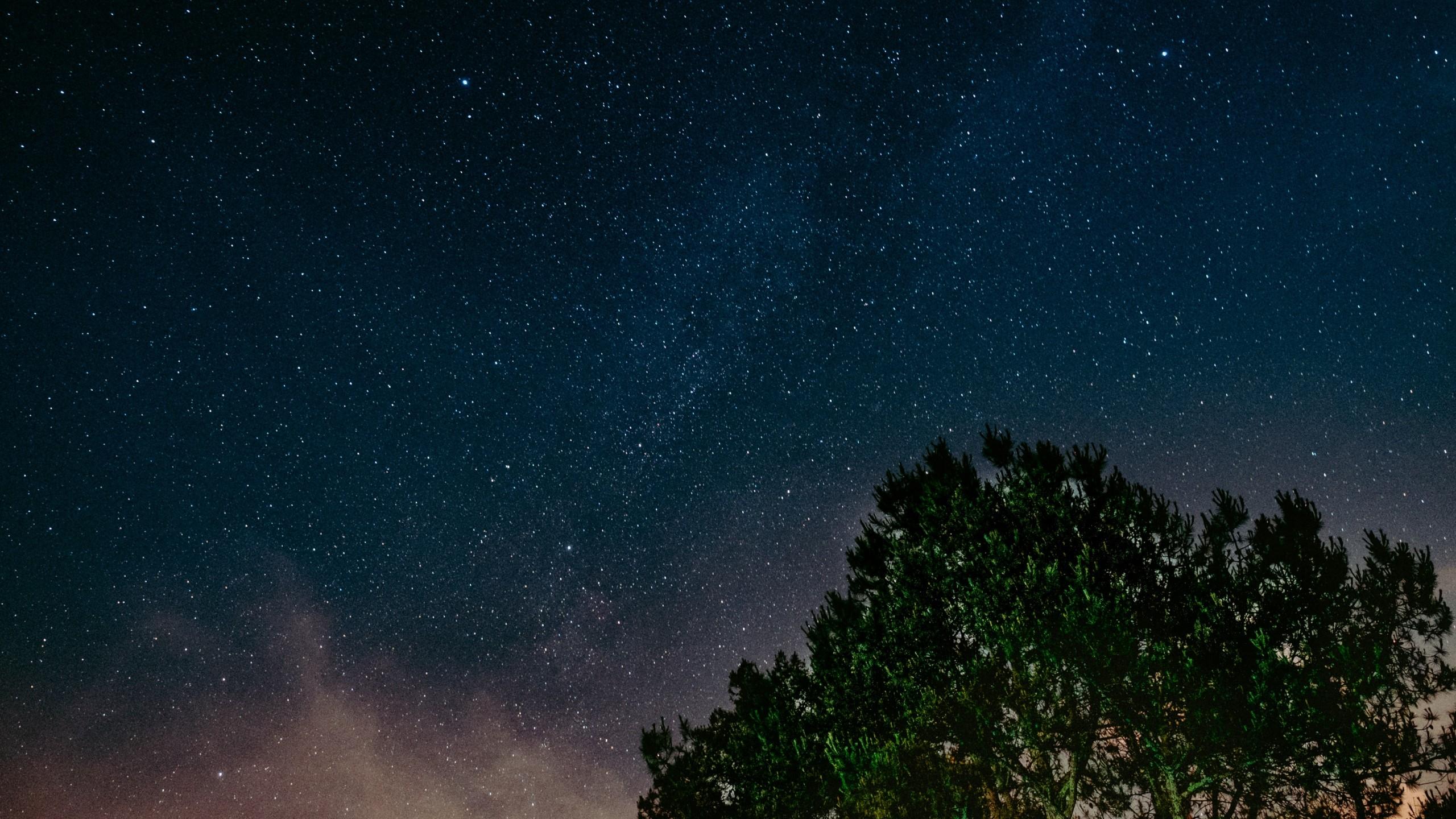 Wallpaper starry sky, tree, night