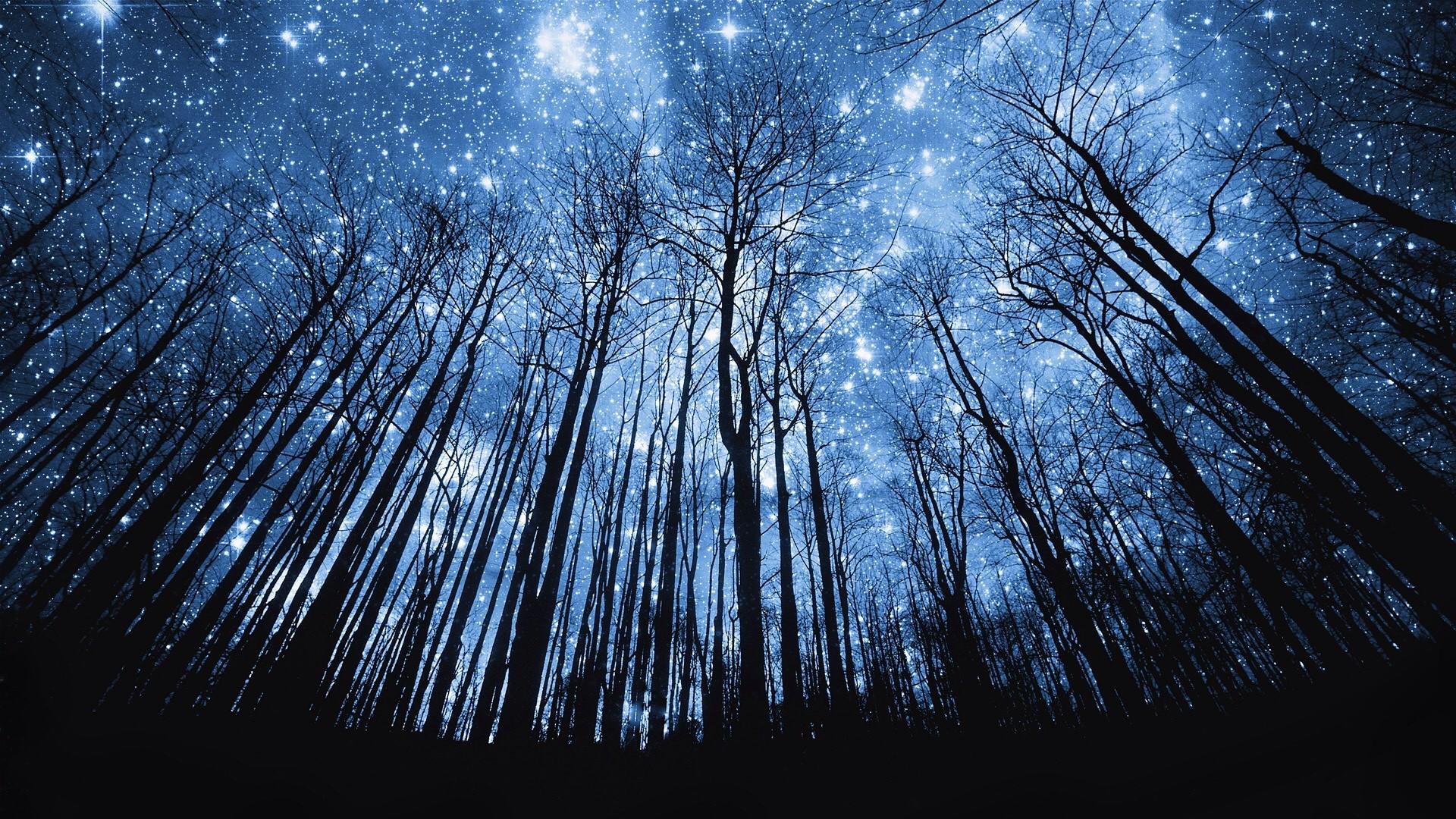 Starry Sky Over Trees Wallpaper