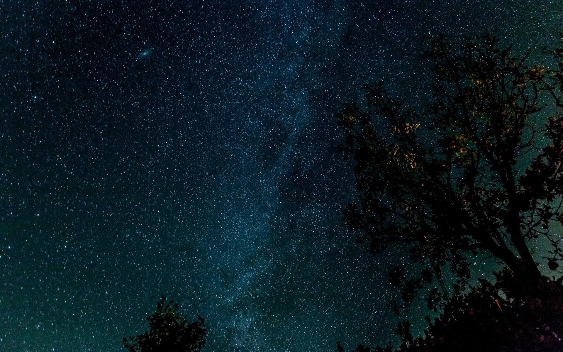 https://www.walldevil.com/wallpapers/w09/space-trees-stars-starry-night.jpg  | the Trees are full of Starlight | Pinterest