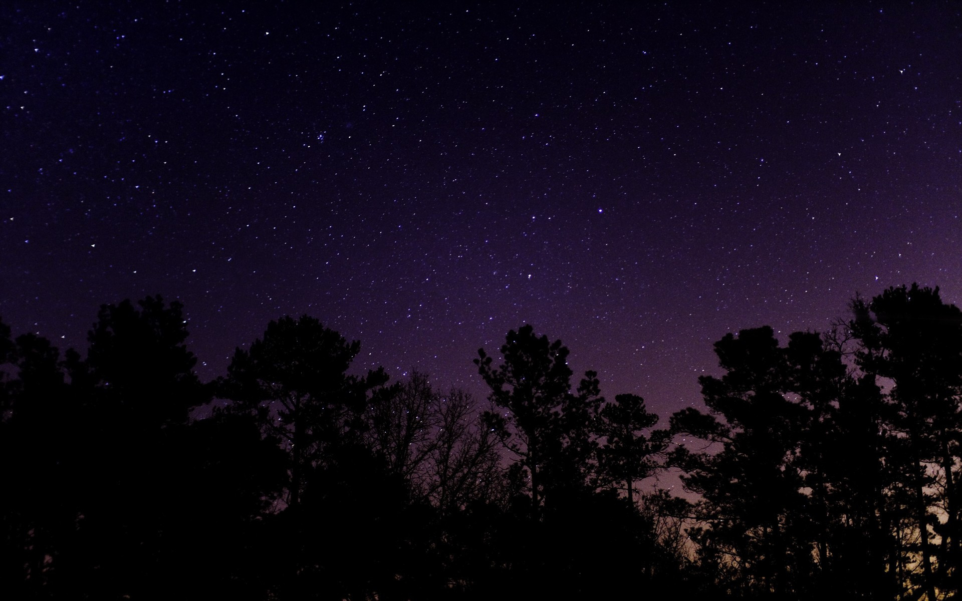 Trees Under The Starry Sky HD Sublime Wallpaper