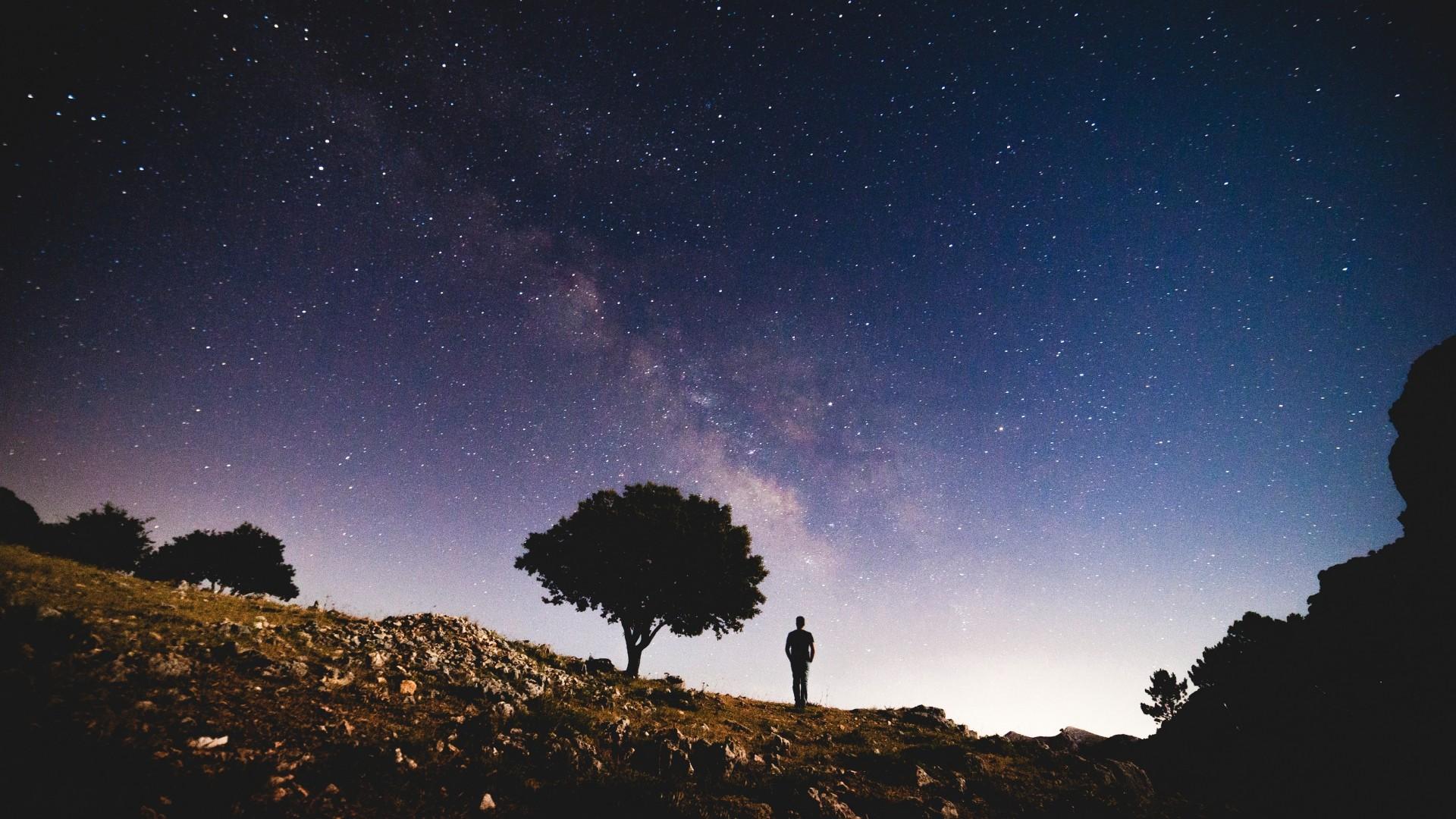 Wallpaper starry sky, silhouette, tree, night, stars
