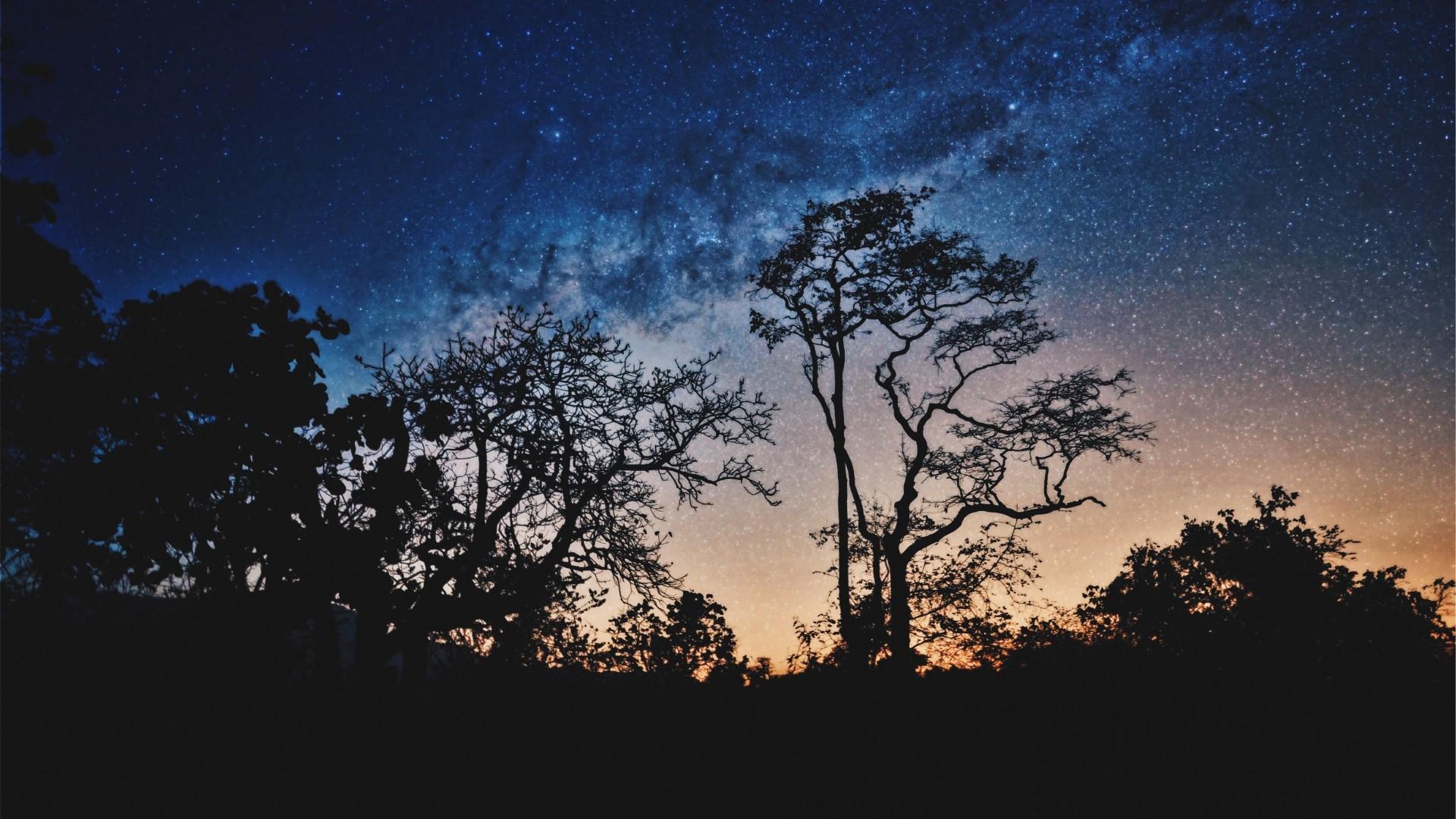 Wallpaper trees, night, stars, sky