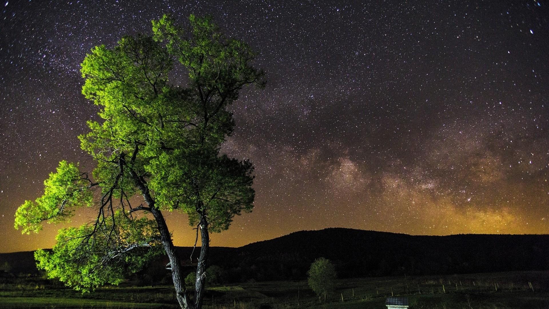 Wallpaper night, sky, stars, tree