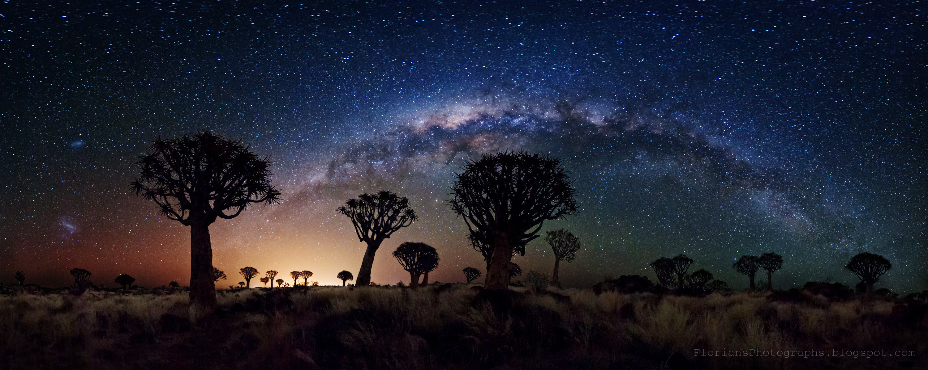 Milky Way over Quiver Trees (widescreen)