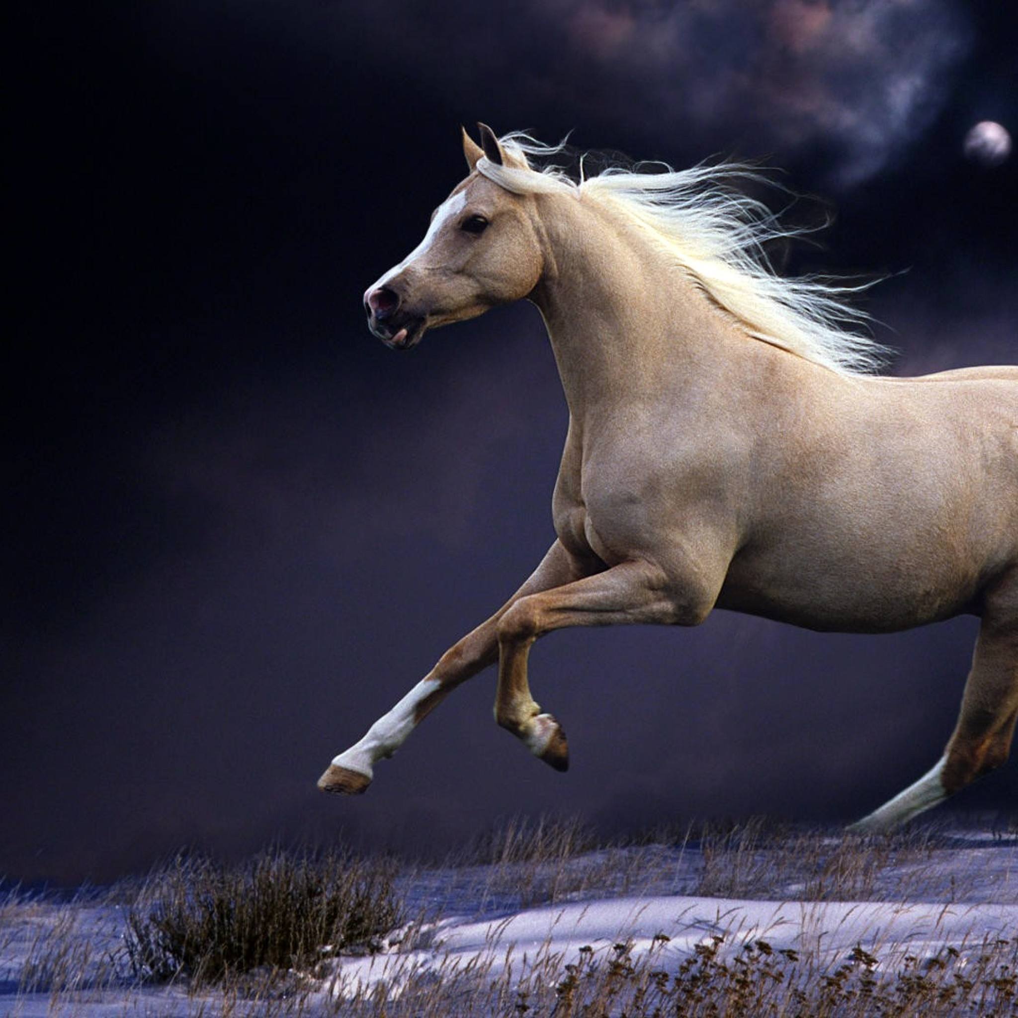 Wallpaper horse, mane, running, beautiful, night, sky