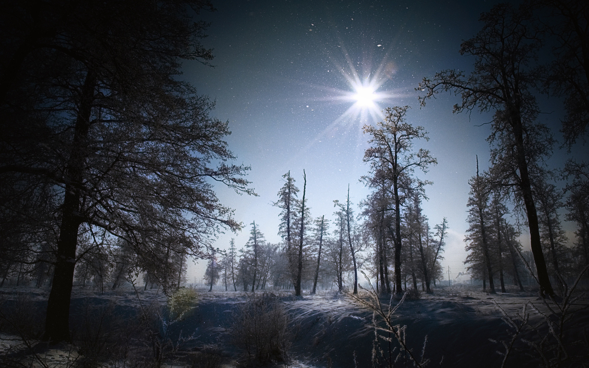 Flakes winter snow night moon light landscapes trees forest wallpaper |  | 41476 | WallpaperUP