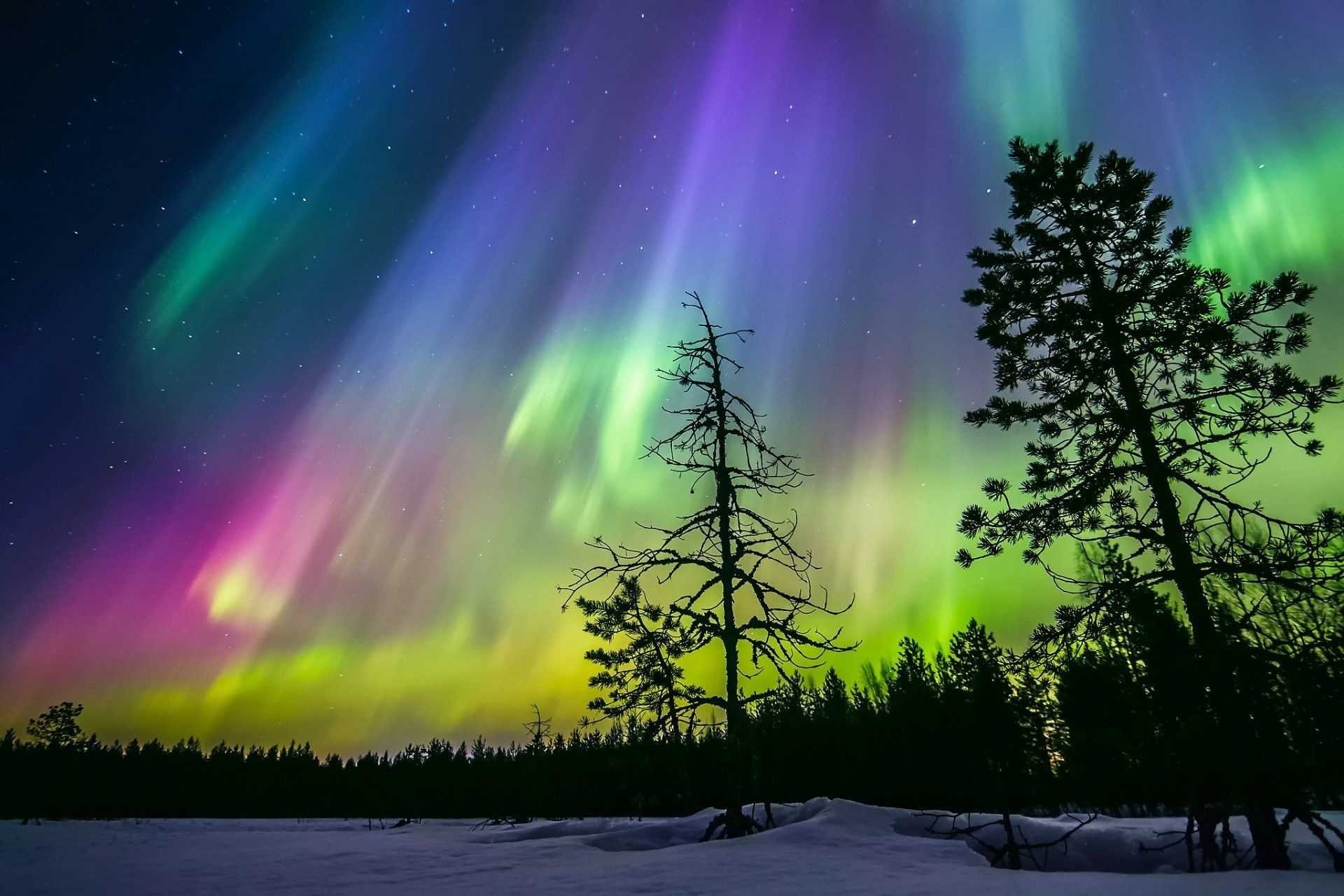 finland winter night sky star northern lights snow forest tree silhouettes
