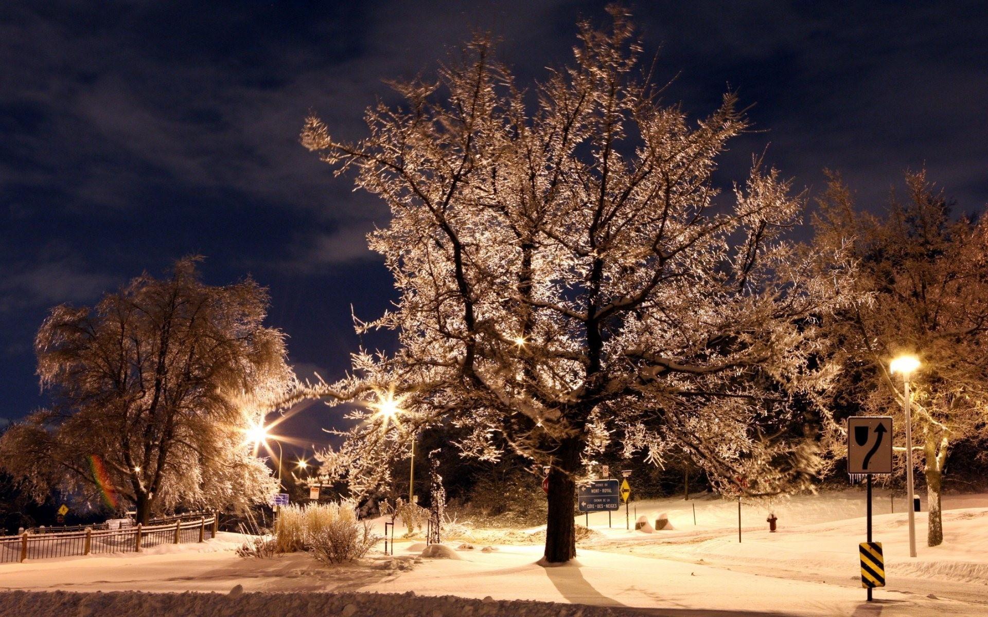 Winter Night in the Park HD Wallpaper