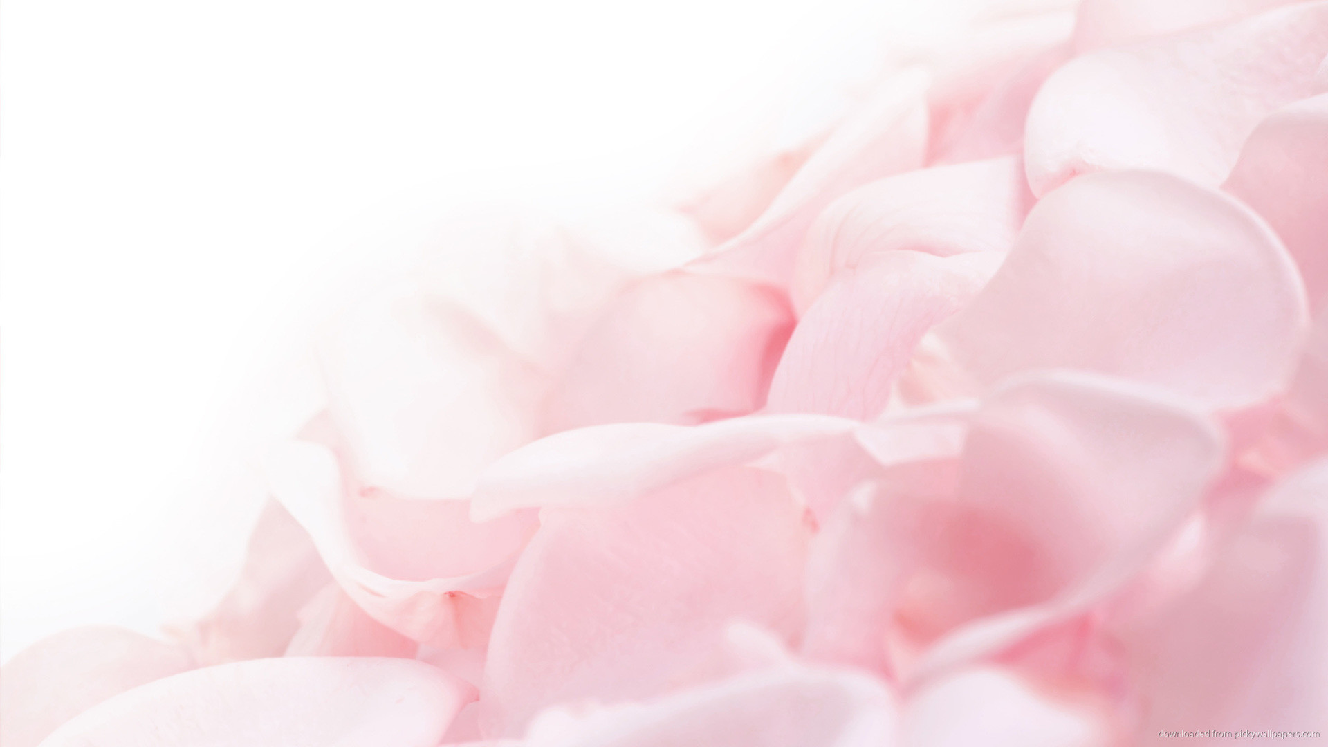 Pink Flower Petals Wallpaper Background picture