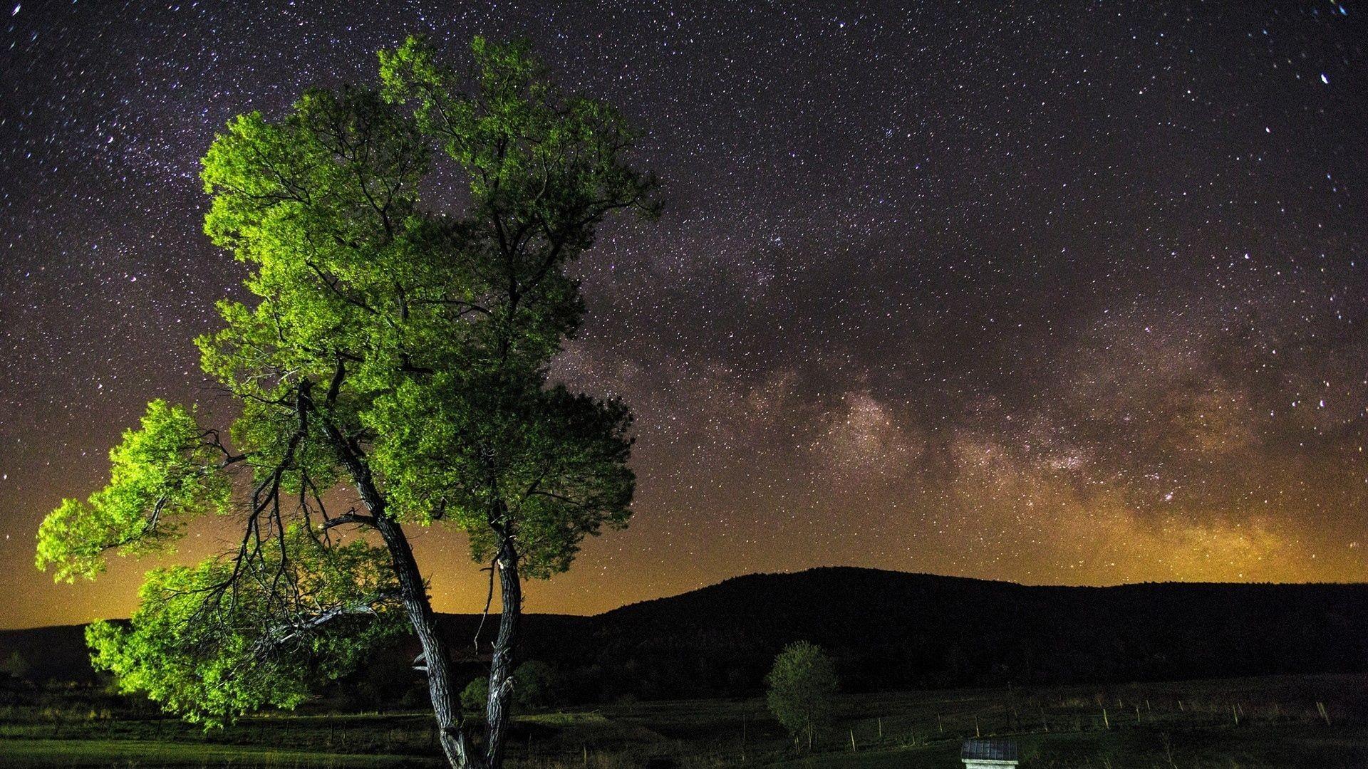 Download Wallpaper Night, Sky, Stars, Tree Full HD 1080p .