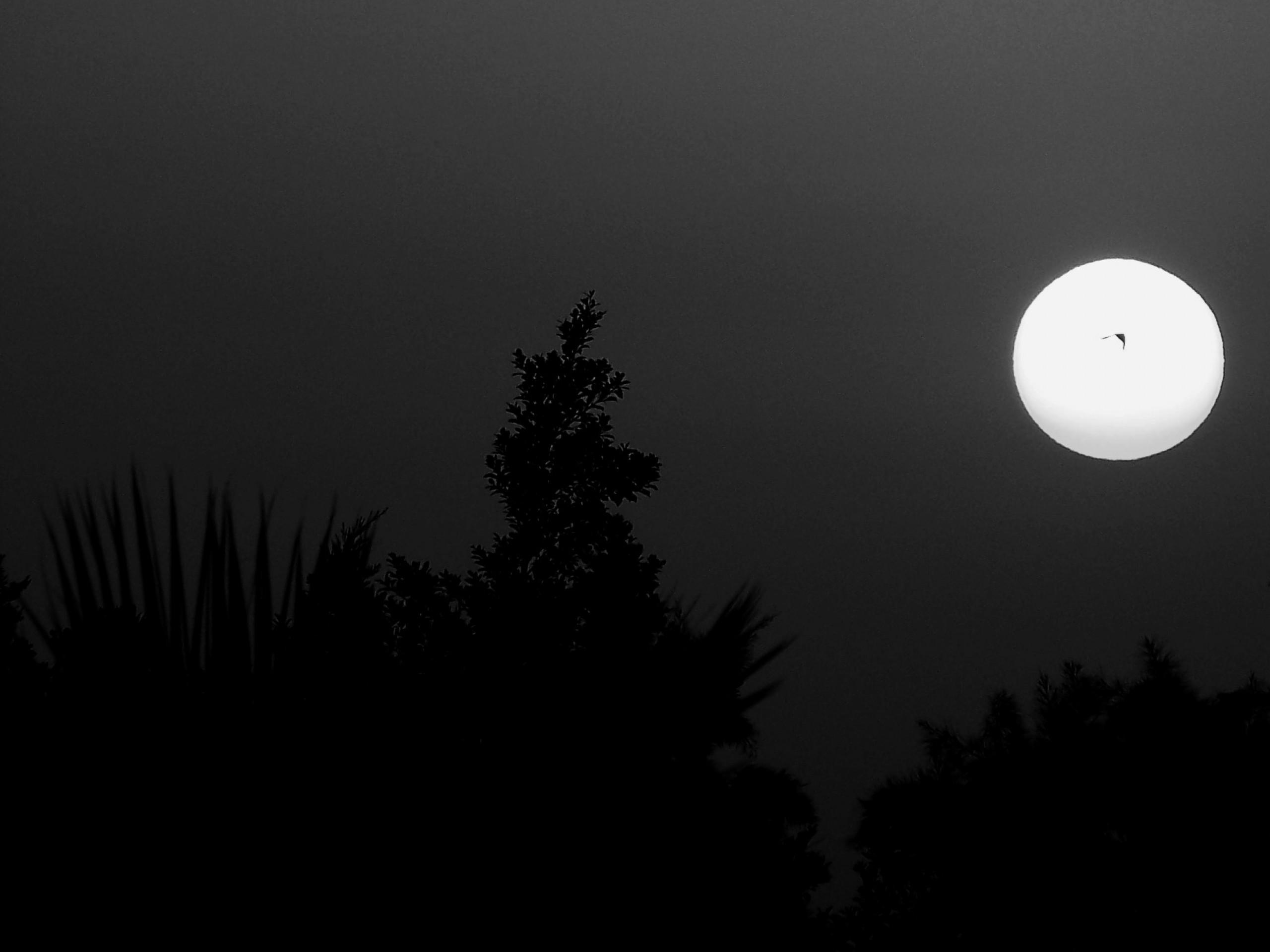 black trees dark night birds moon morocco moon light midnight Wallpaper
