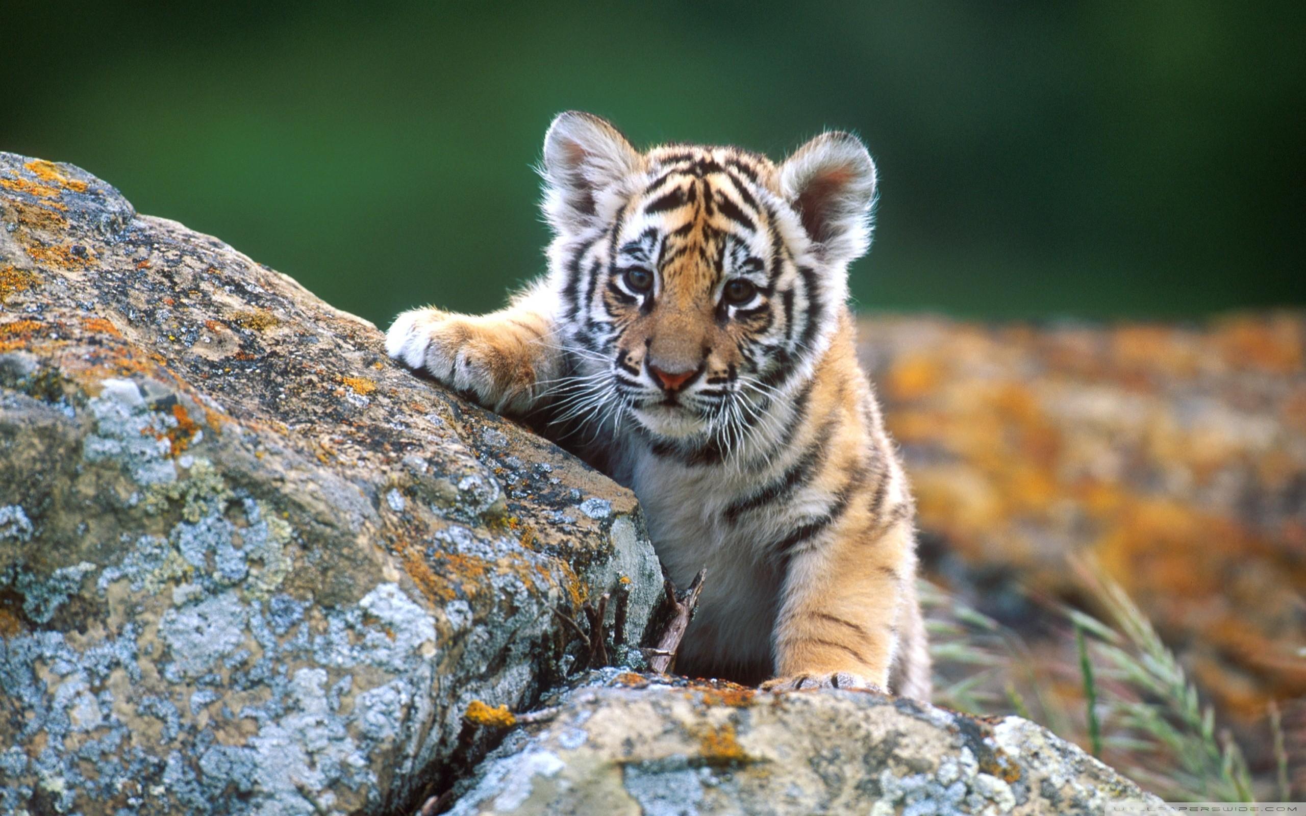 best ideas about Chicago cubs wallpaper on Pinterest Cubs
