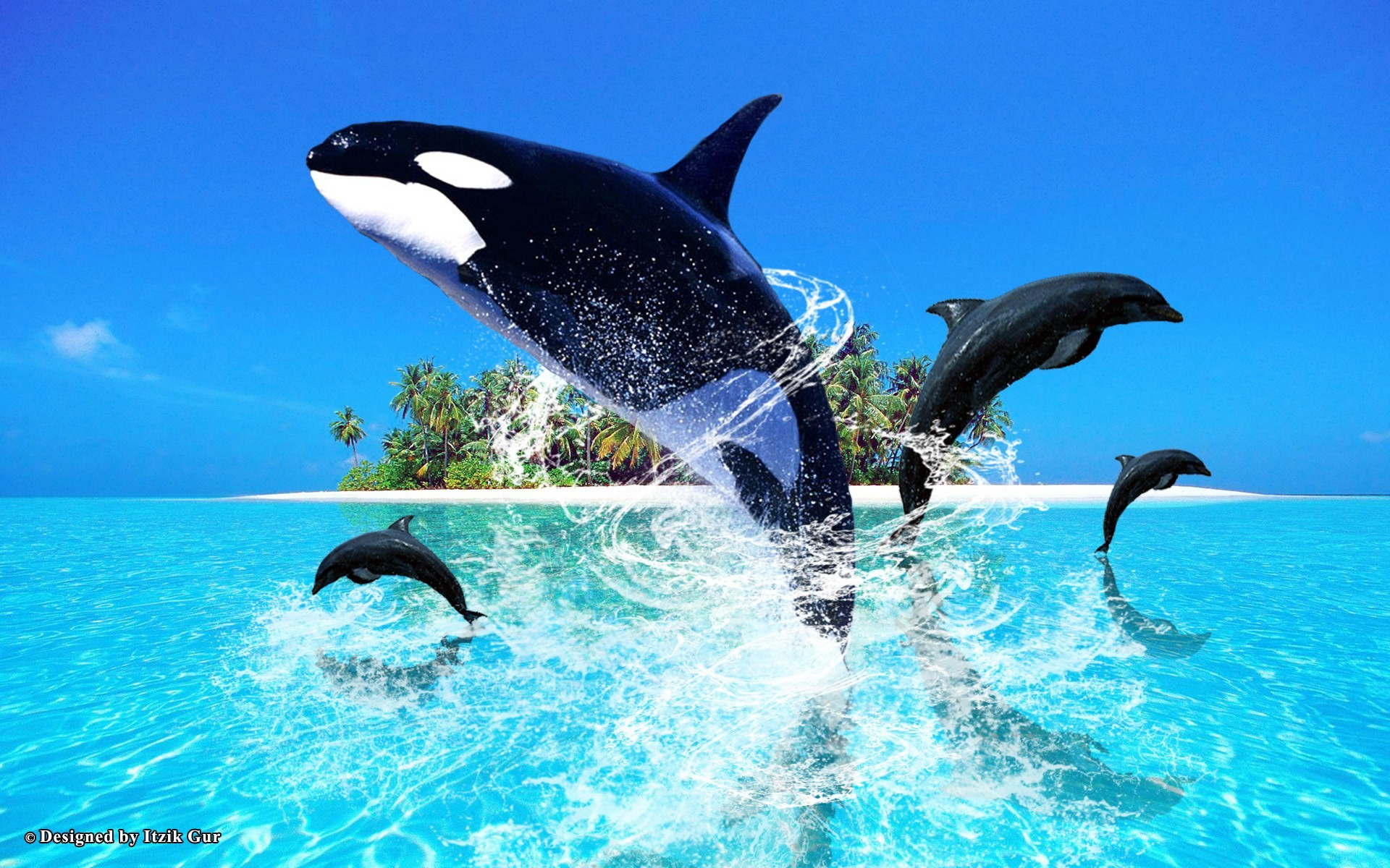 Dolphin Wallpapers Hd Pictures One Wallpaper