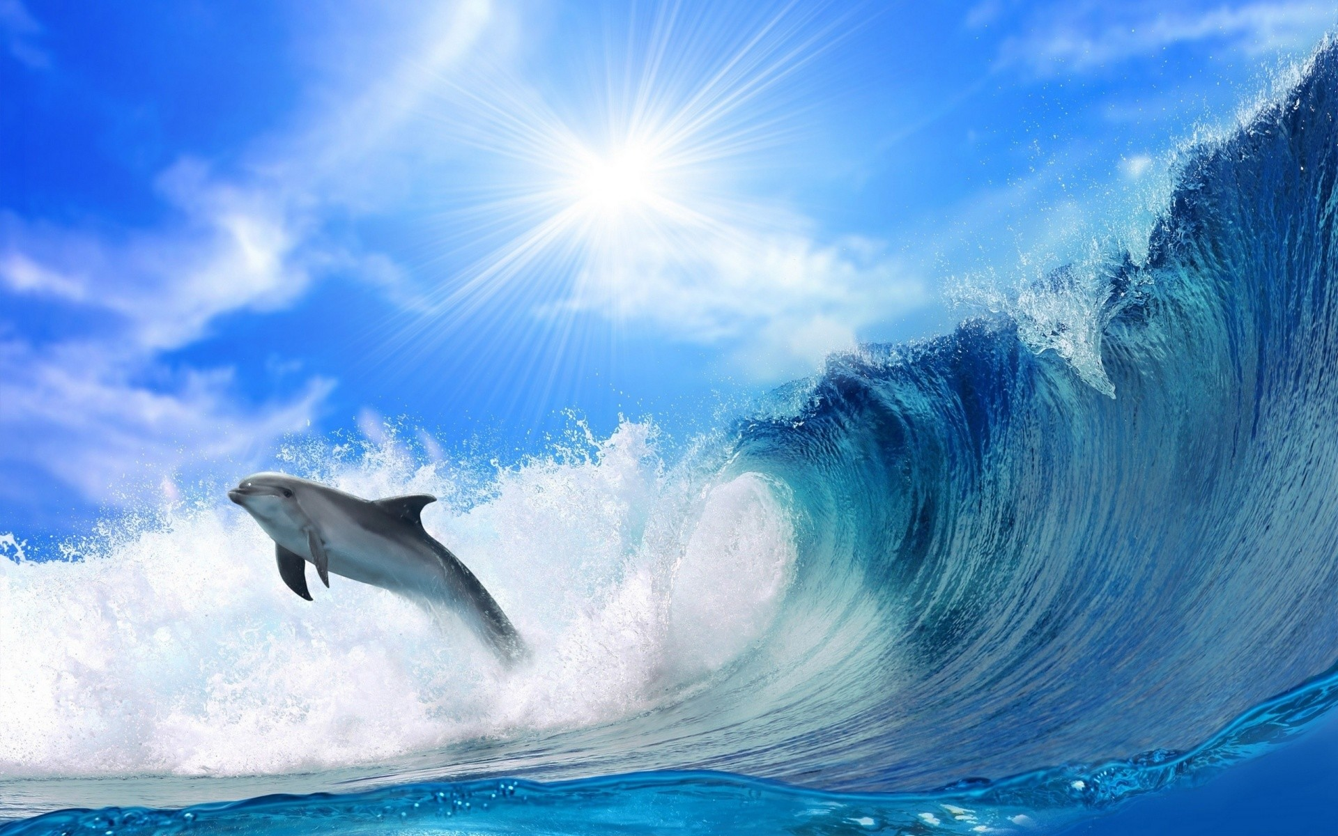Miami Dolphin Wallpapers – Wallpaper Cave
