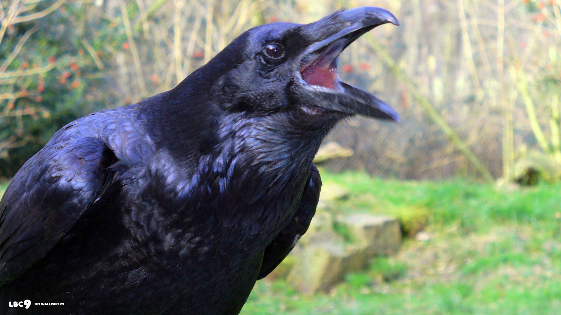 Baltimore Ravens Wallpapers – Wallpaper Cave