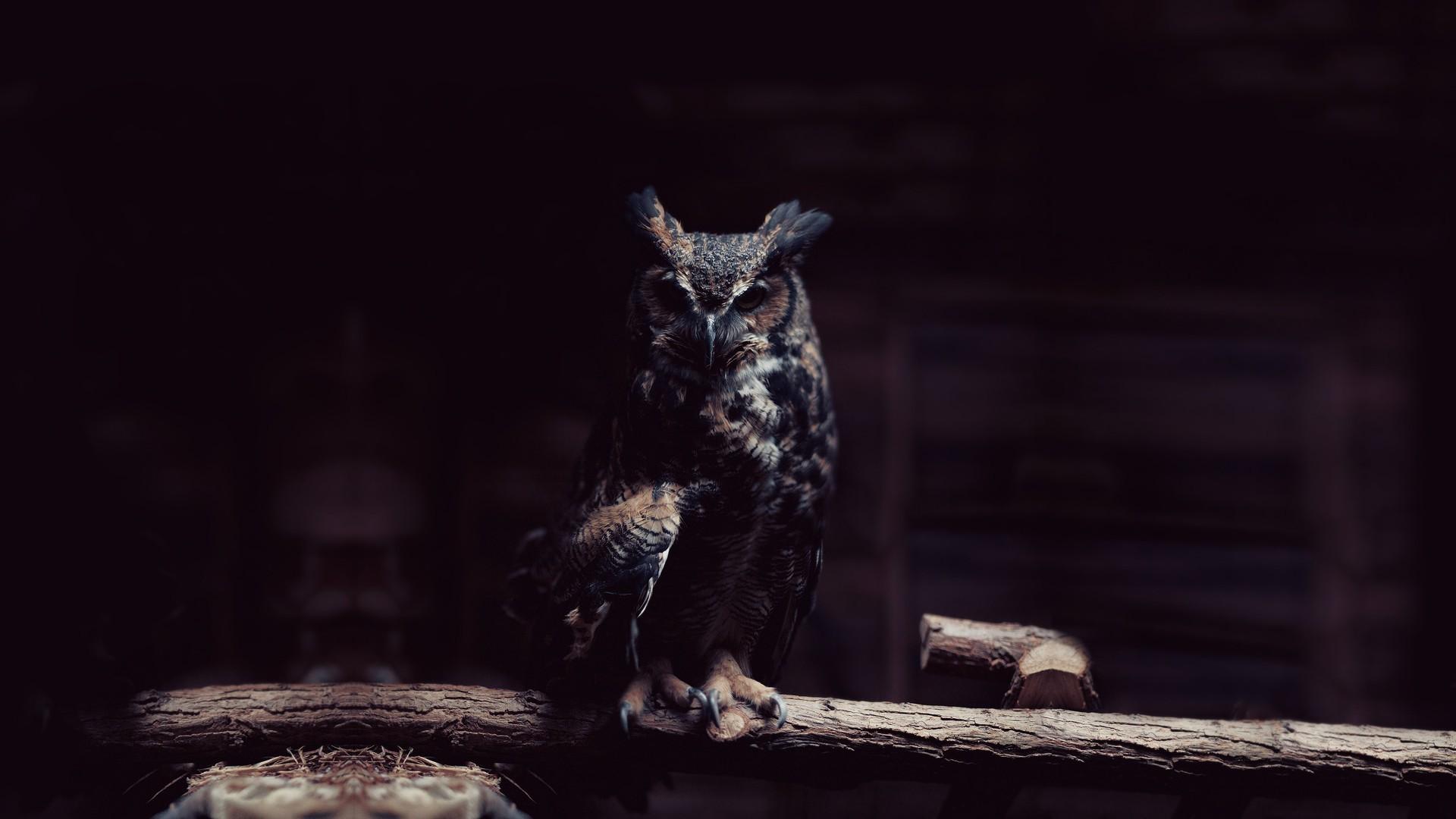 … dark owl birds wallpapers hd desktop and mobile backgrounds …