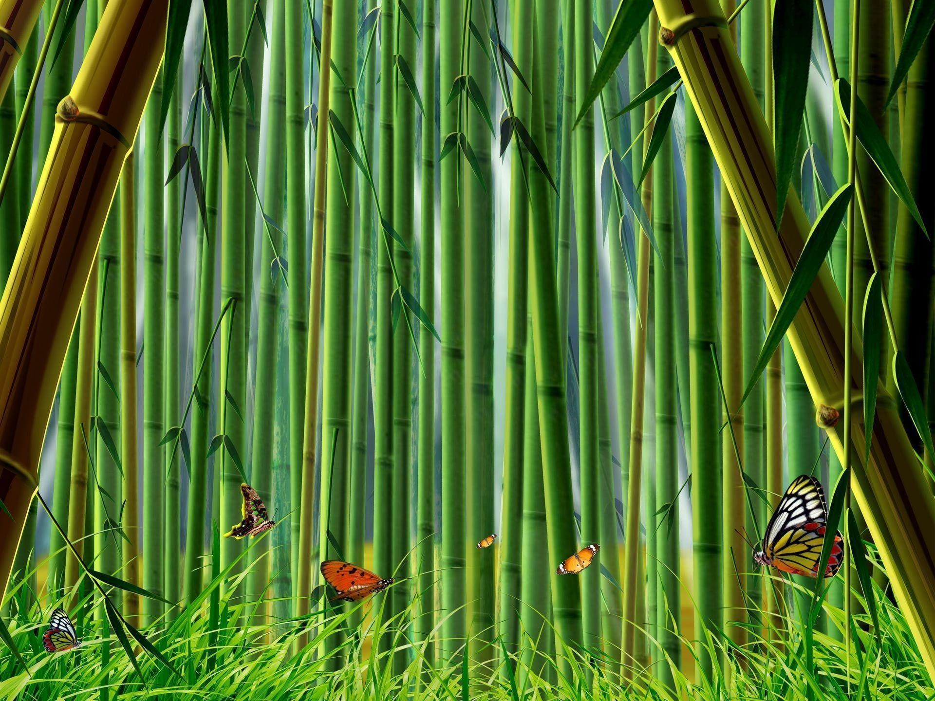 Desktop Wallpaper · Gallery · Computers · Bamboo Forest   Free .