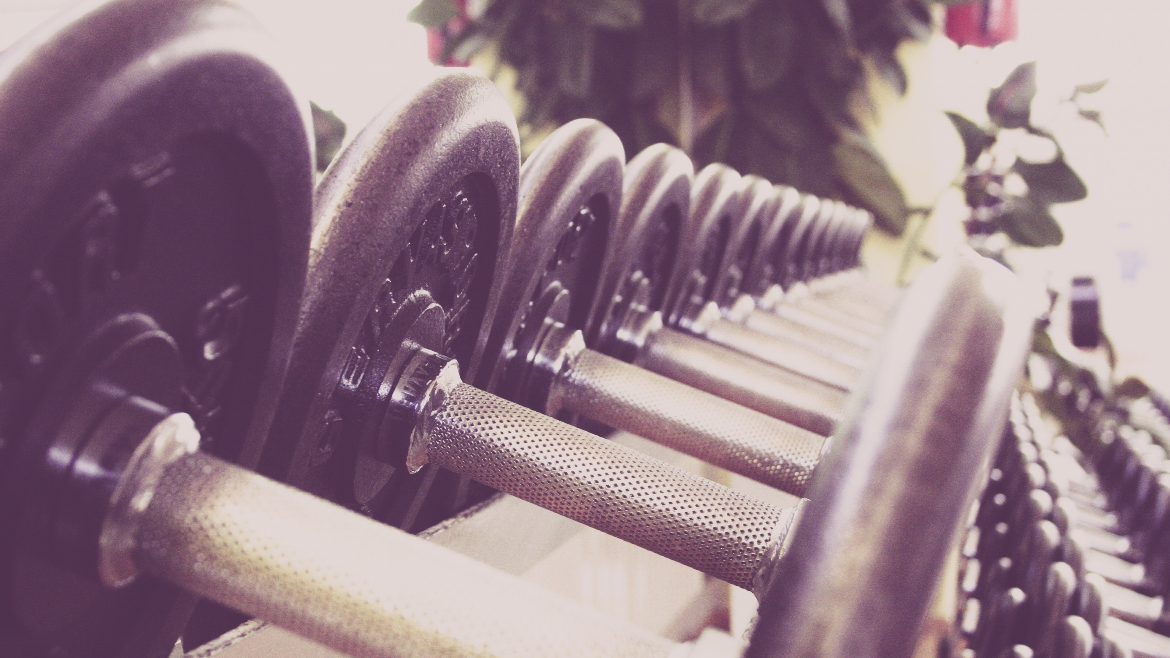 Wallpaper dumbbells, sports, gym