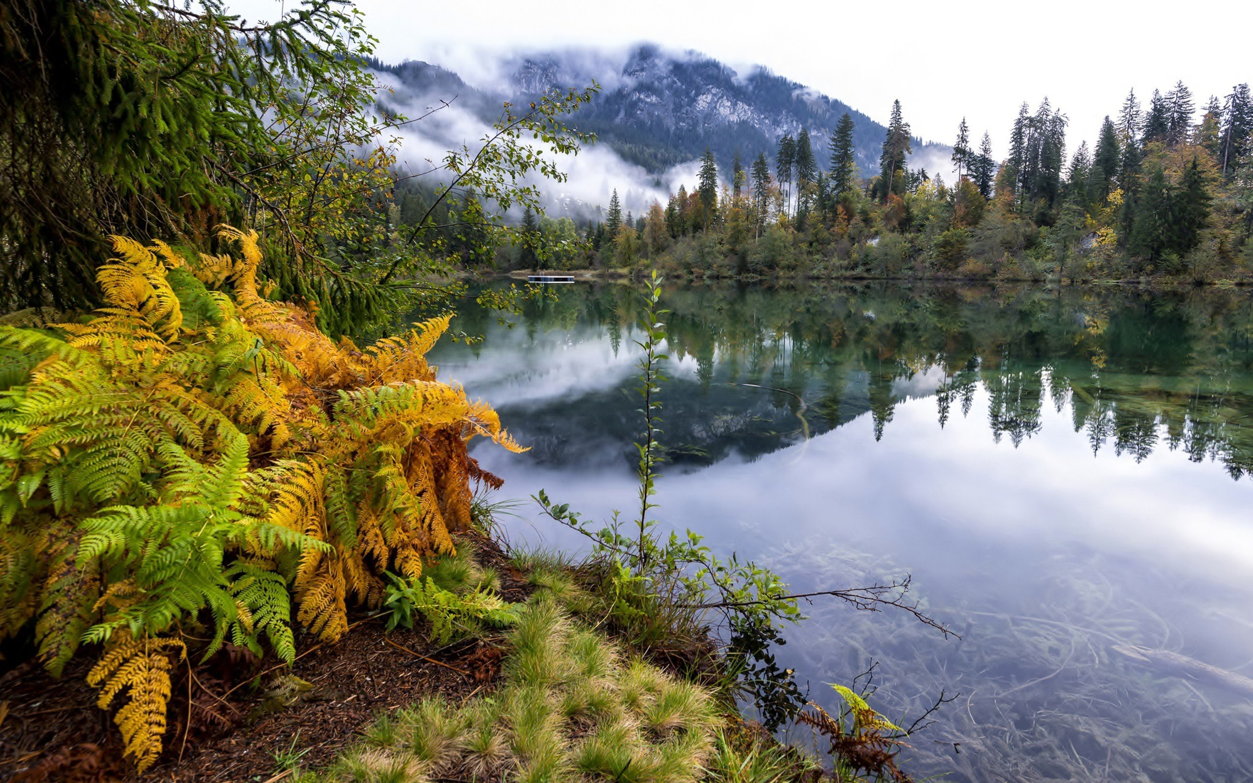 Landscape 4K Ultra HD Wallpaper | … forest landscape fog lake ultrahd 4k wallpaper  wallpaper background | Божье творение | Pinterest | Wallpaper …