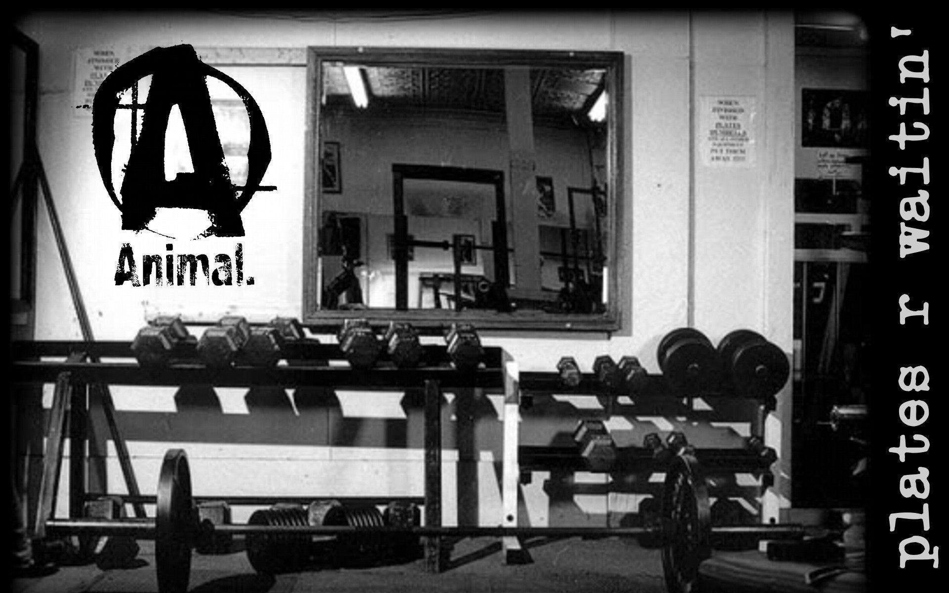 Wallpapers For > Weight Lifting Wallpaper