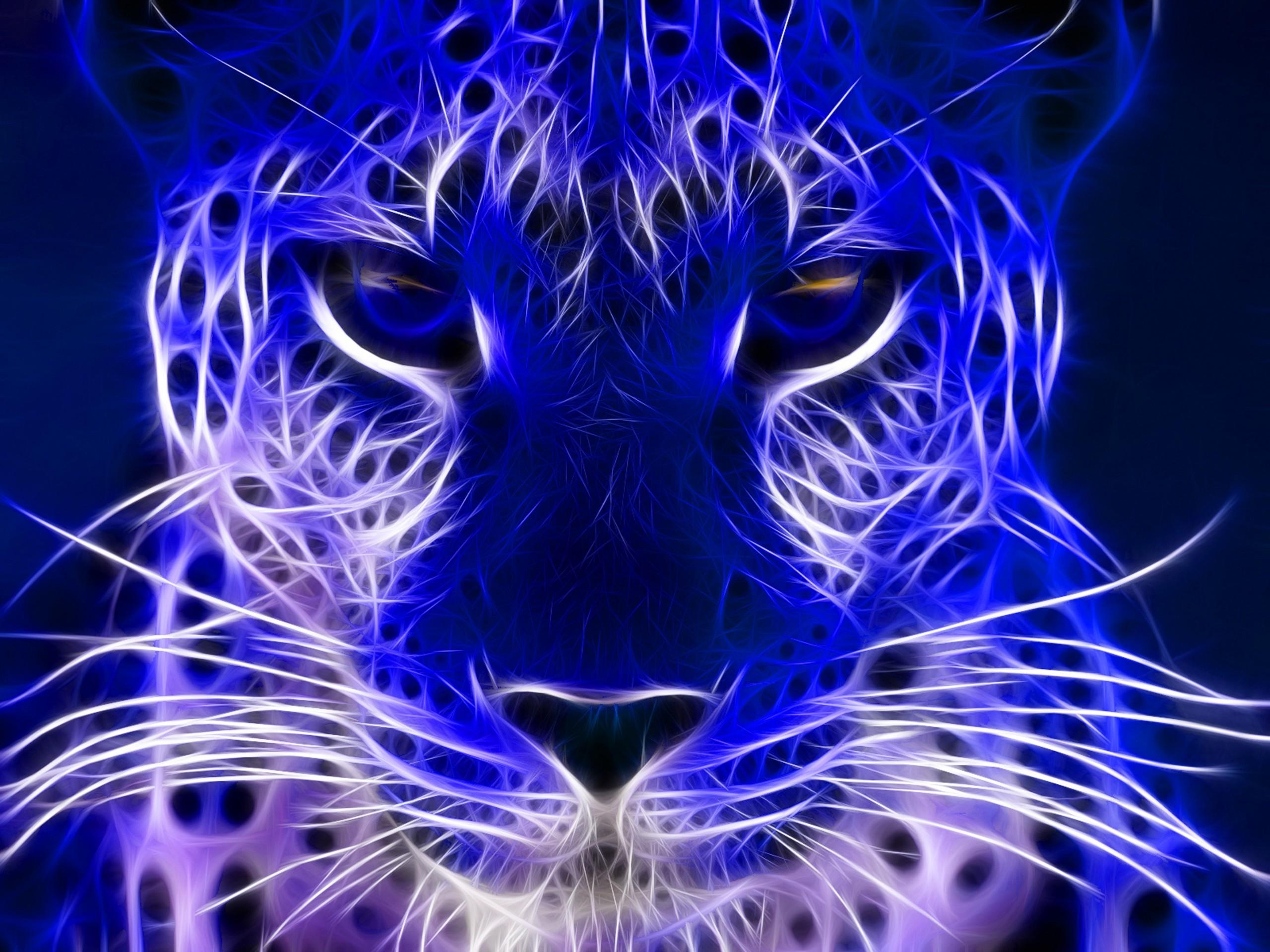 Wild Animals Blue Cheetah Cat Cats Hd Jootix 857075   HD Desktop .