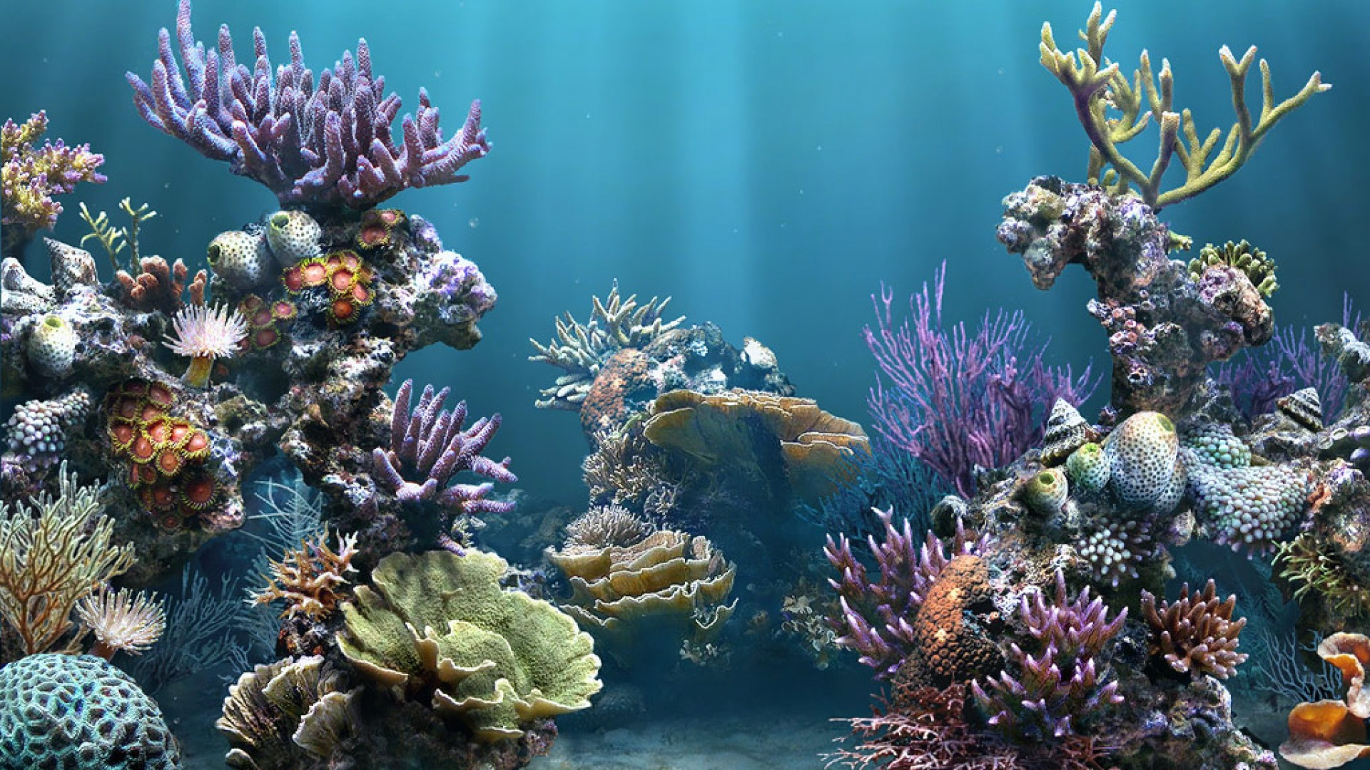 Aquarium Backgrounds Pictures Wallpaper 1920×1080 Aquarium Wallpaper (24  Wallpapers) | Adorable Wallpapers