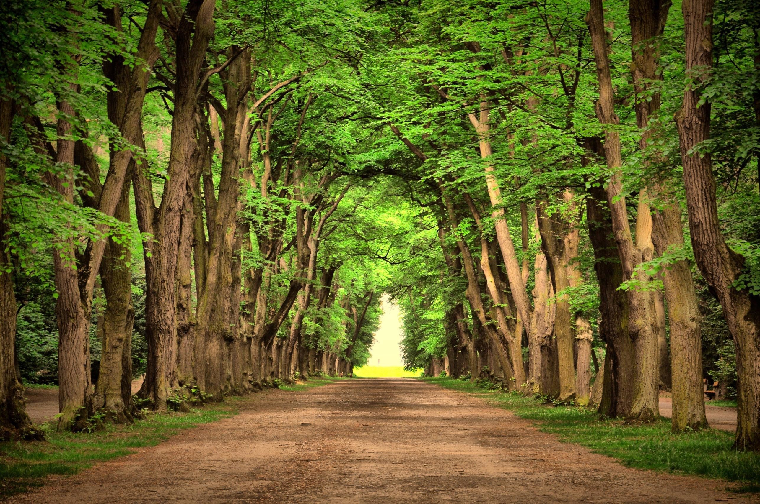 Scenic path in the woods wallpaper 4288×2848 – Wallpaper .