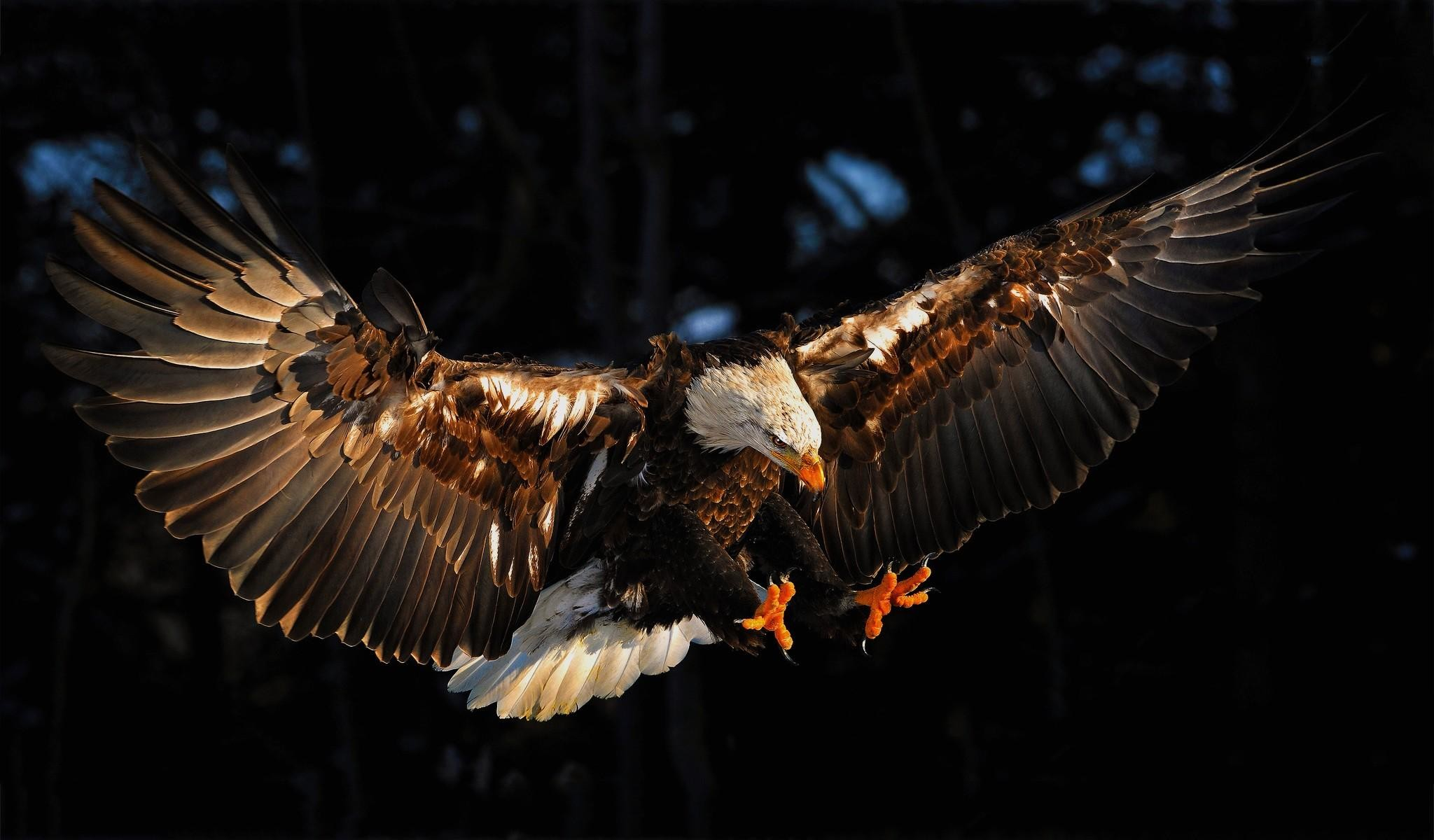 Eagle Wallpapers, Download Eagle HD Wallpapers for Free, GuoGuiyan  2048×1200 Eagle Wallpapers