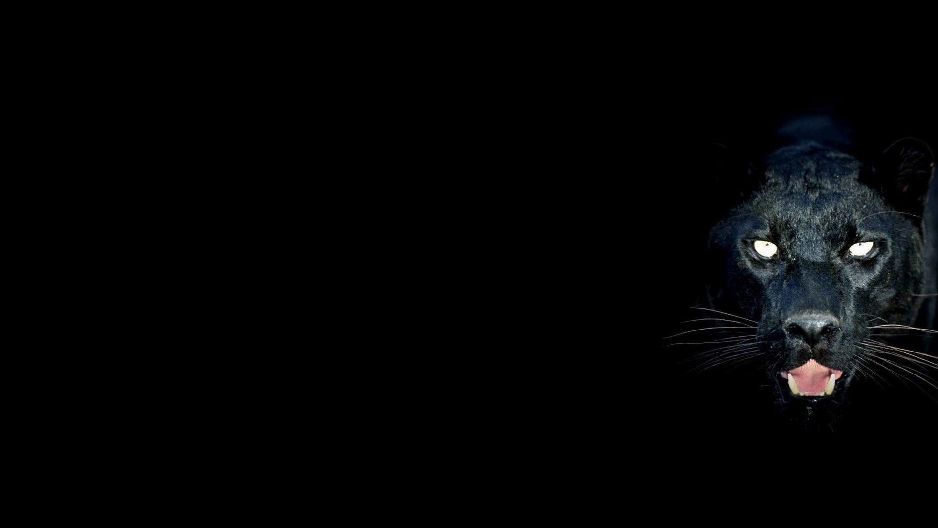 black-panther-image-Full-HD-Photos-1920-x-