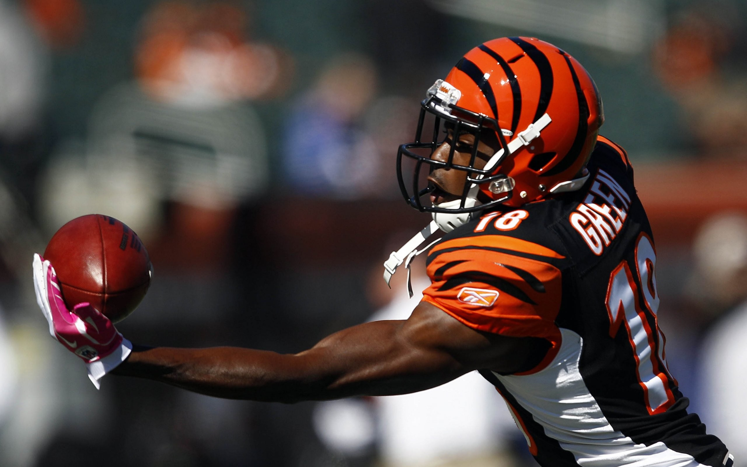 Free HD Bengals Wallpapers.